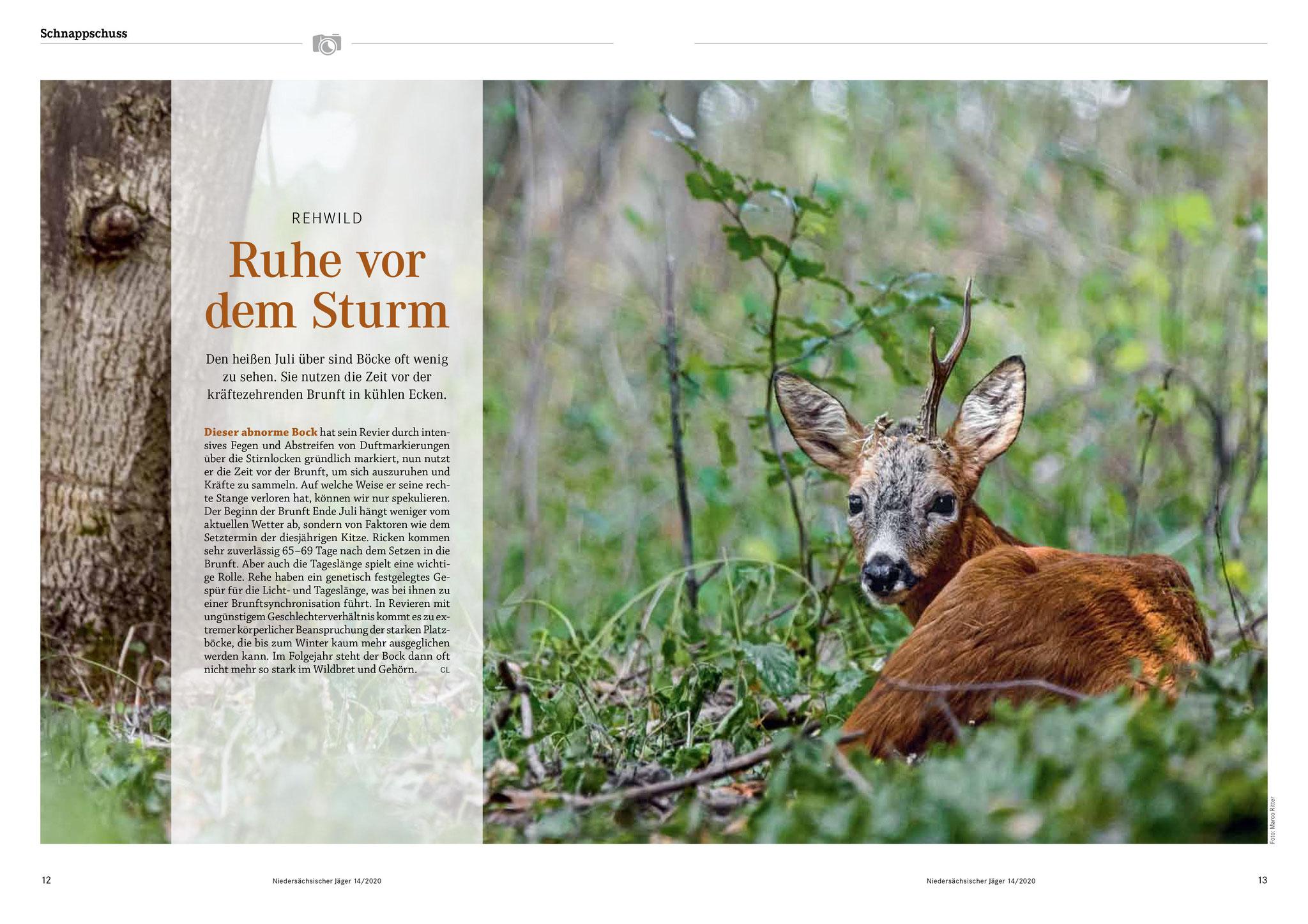 Schnappschuss im Niedersächsischen Jäger 14/2020