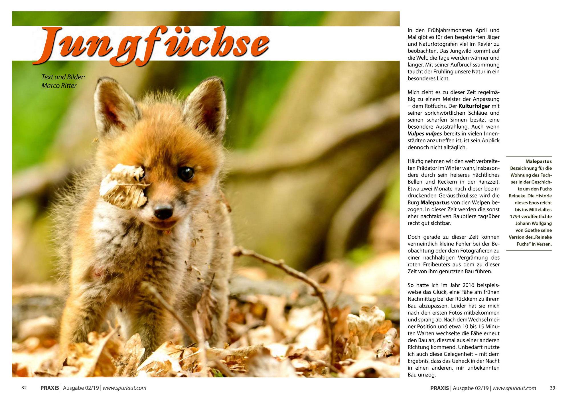 """Bebilderung des Artikels """"Jungfüchse"""" in Spurlaut Ausgabe 02/2019"""