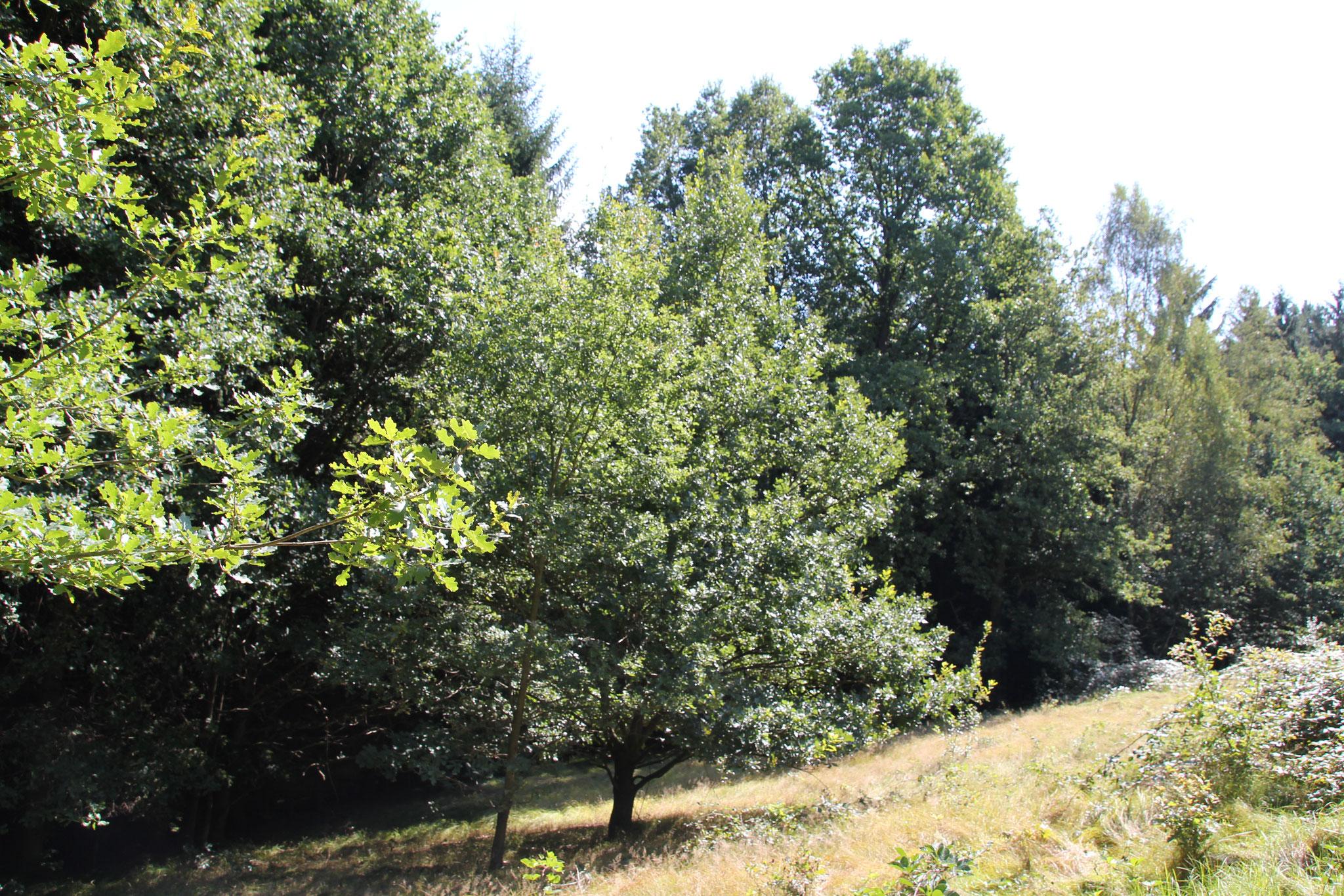 Wald in Bad Schandau kaufen