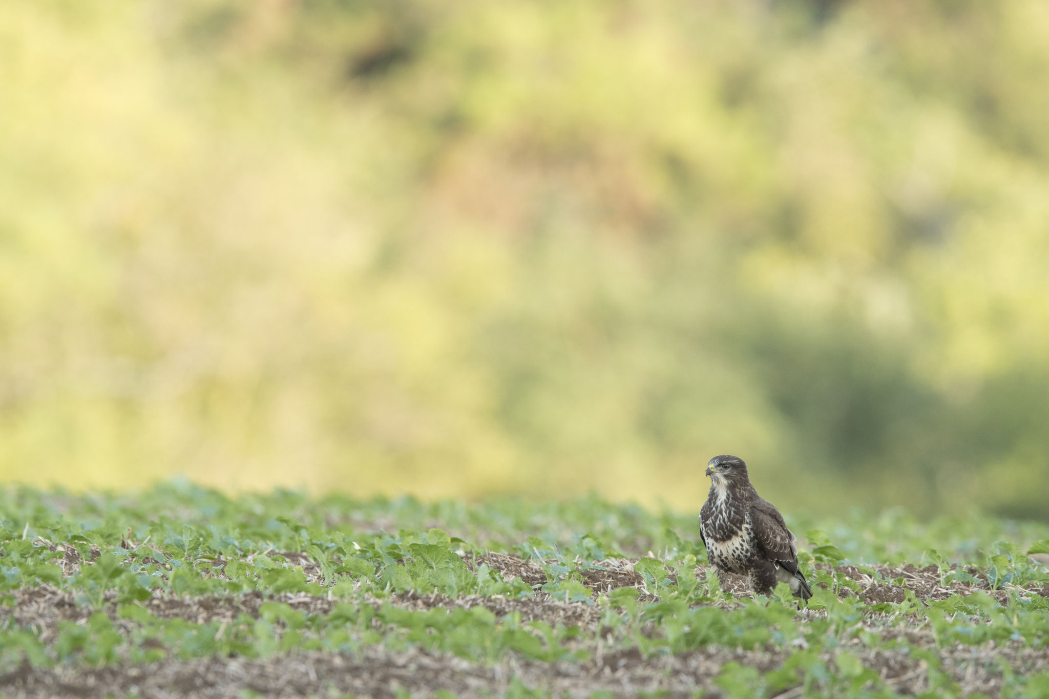 Buse variable ©Thierry Lebert