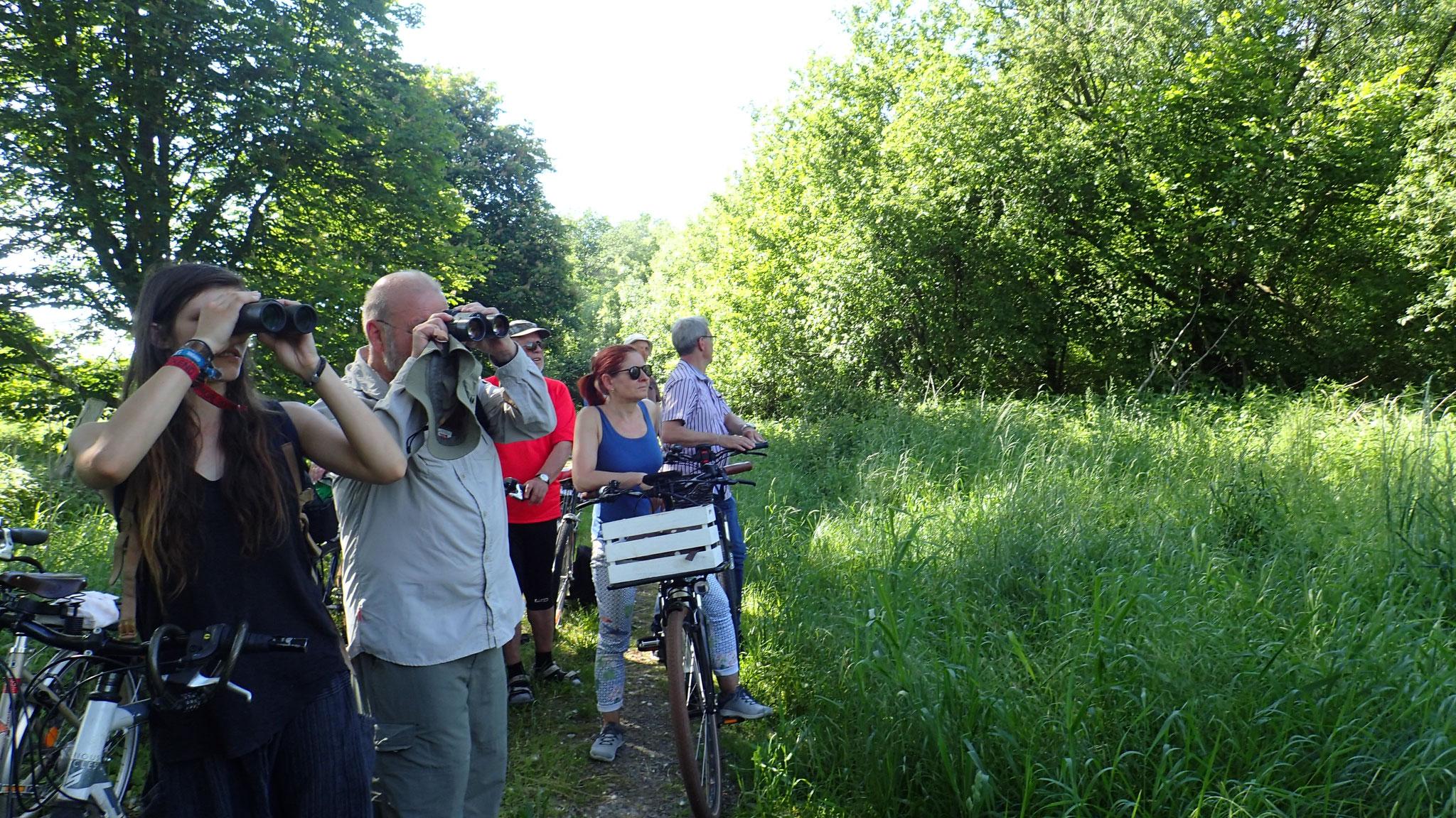 Botanisch-Ornithologische Fahrrad-Exkursion. Foto: ÖNSA/N.Feige