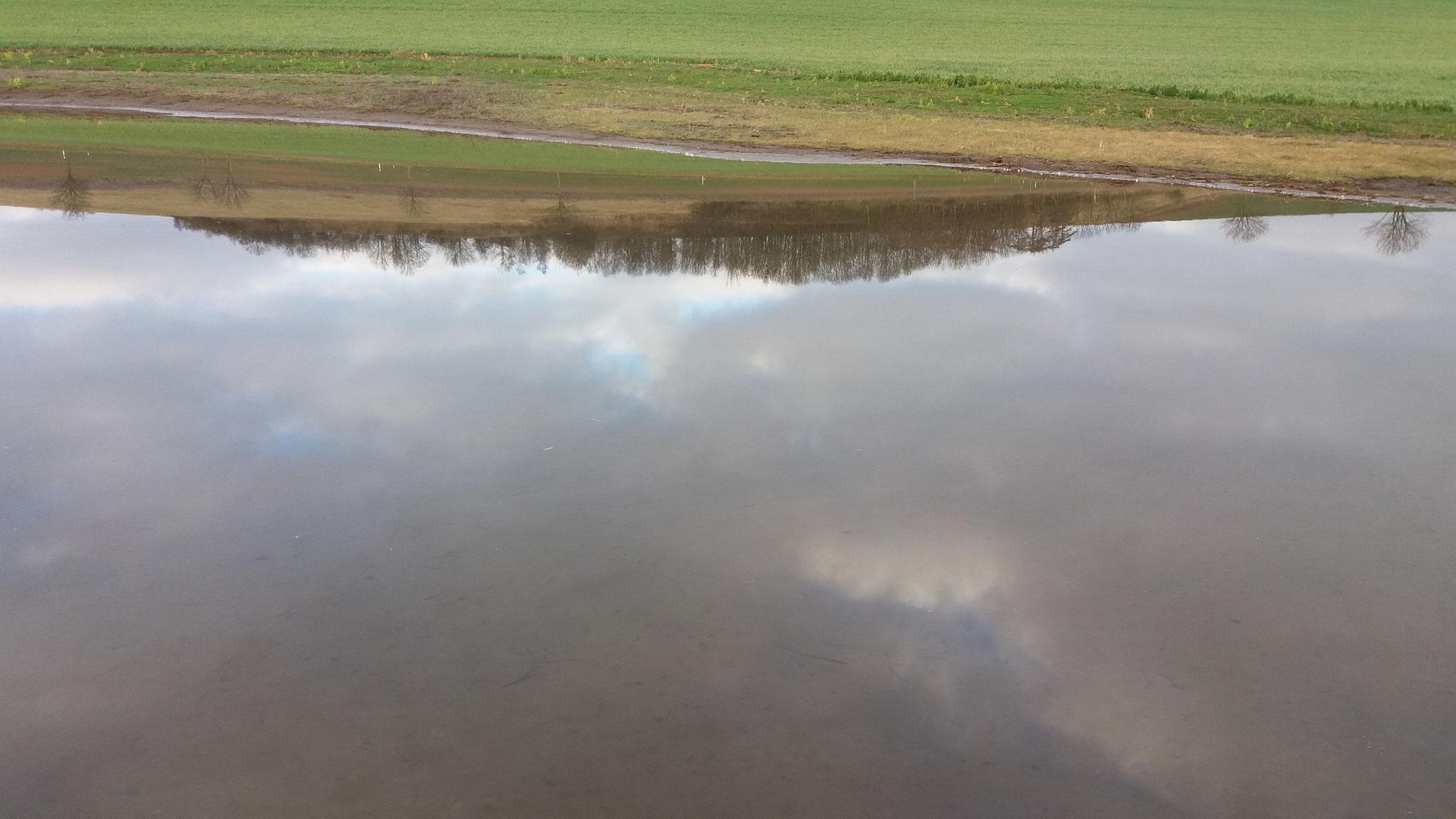 Stille Wasser sind nicht unbedingt tief - die Wasserfläche neben der Soltauqelle ist nur mehrere Zentimeter tief. Foto: ÖNSA/M.Neßmann