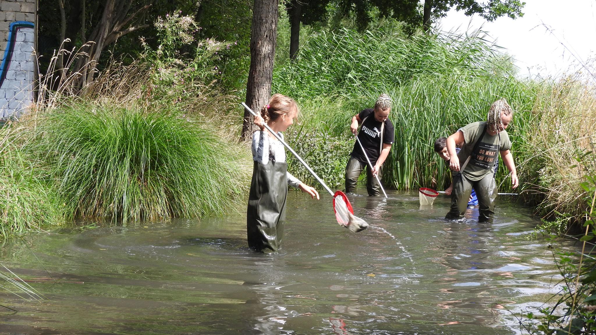Das Fluss-Fisch-Mobil - eine gemeinsame Aktion mit der Aktion Fischotterschutz.  Foto: ÖNSA/N.Feige