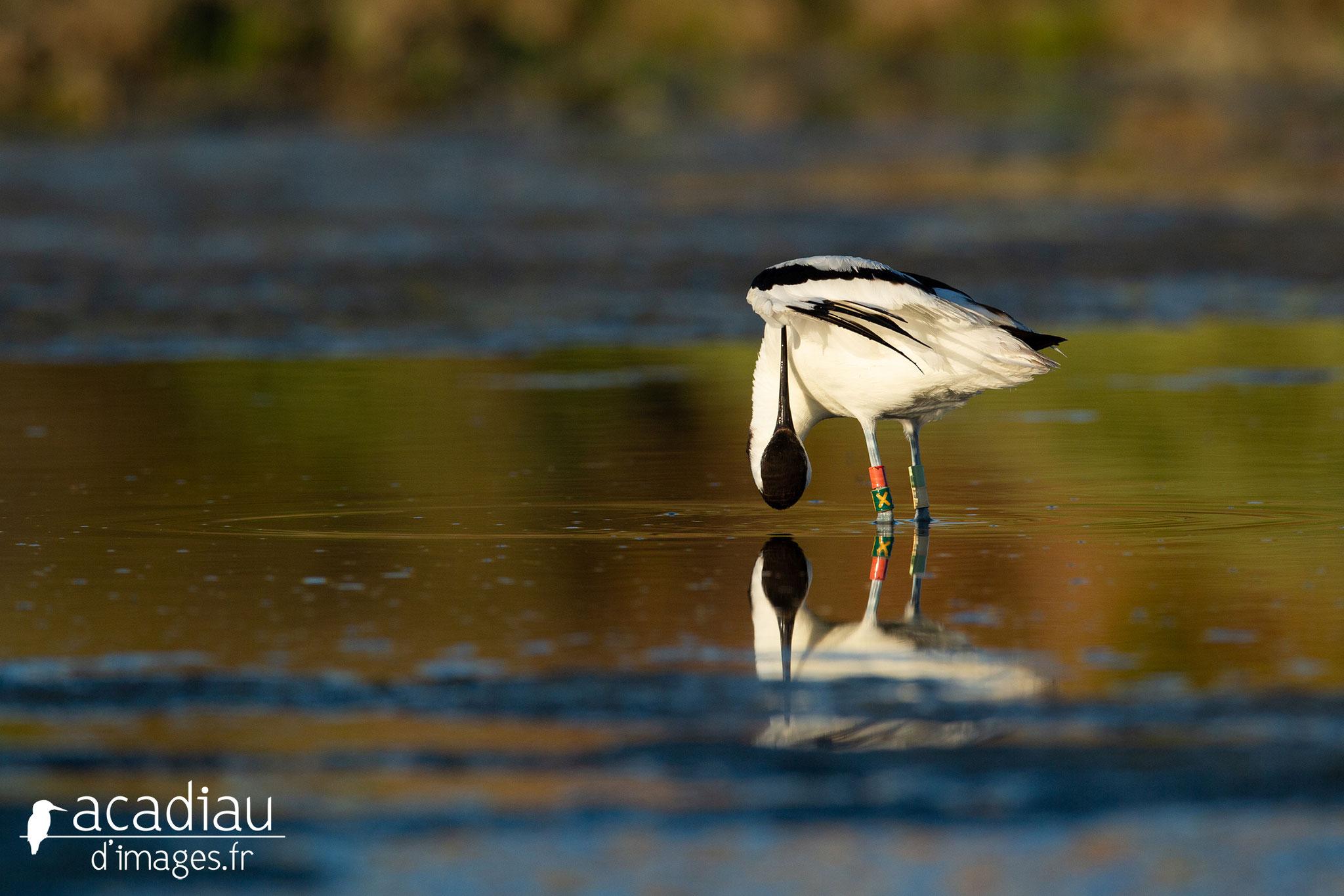 Stage photo nature à Noirmoutier avec Focus Nature ©Alexandre Roubalay