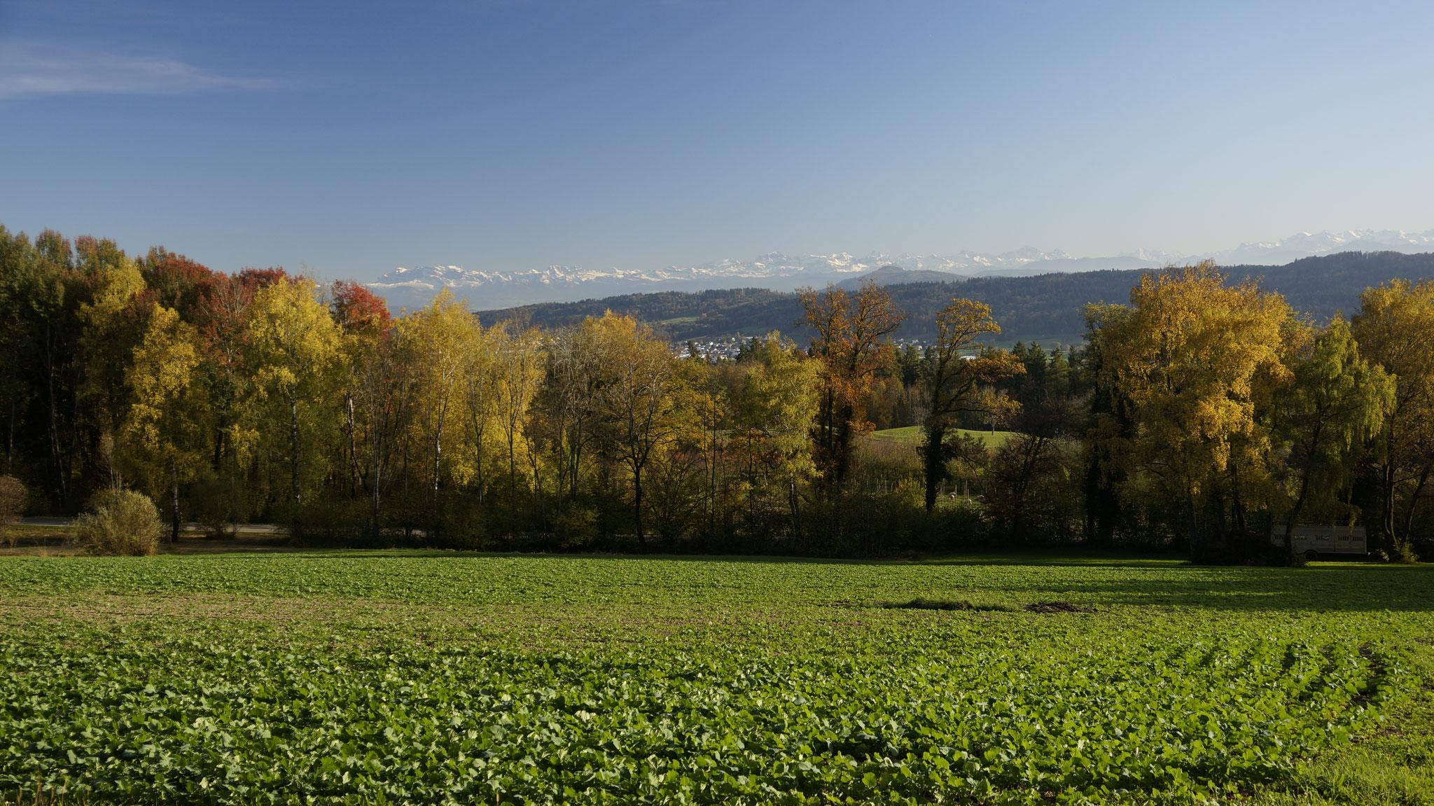 26.10.2017::Weidstöckli Richtung Alpenkette
