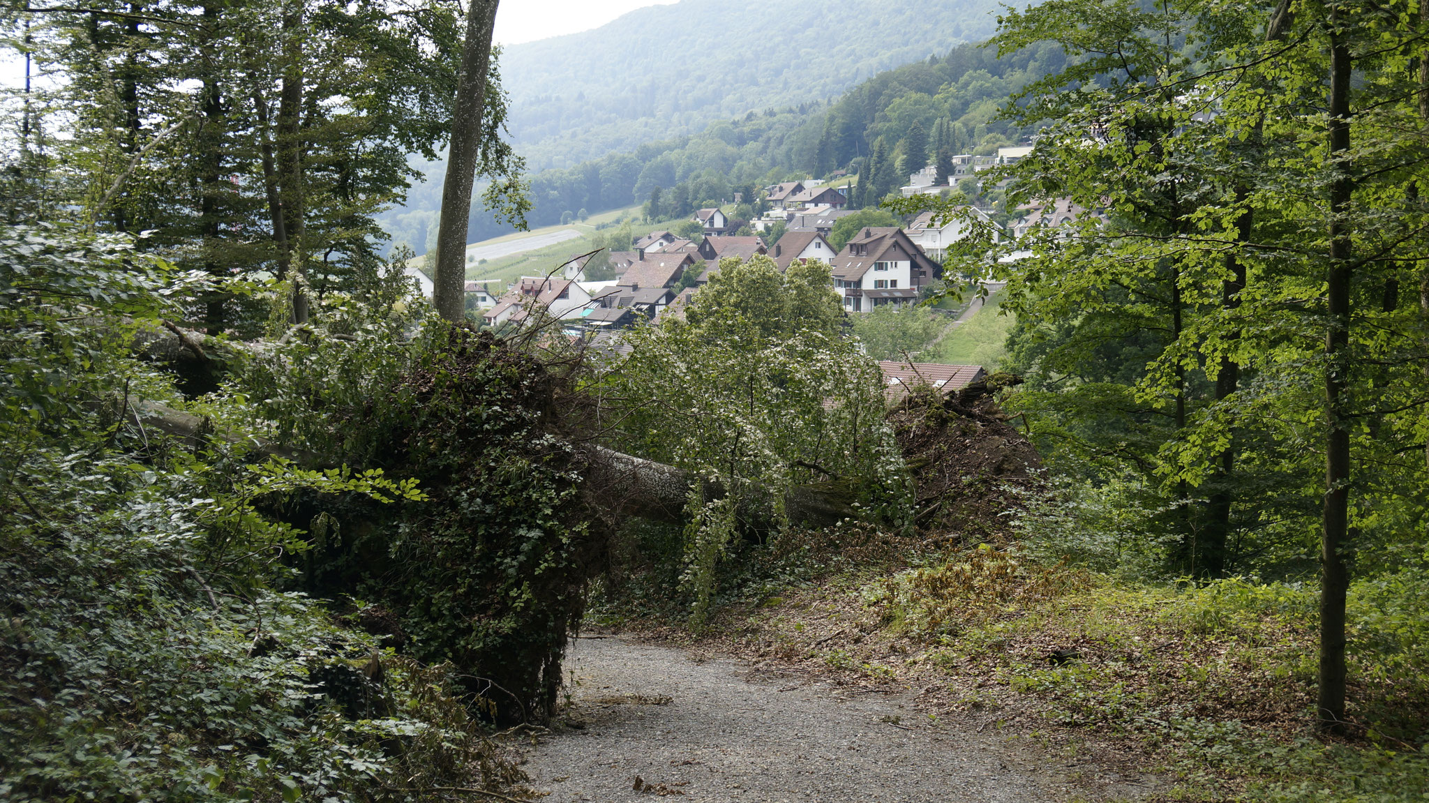 Wald oberhalb Sonnhalde