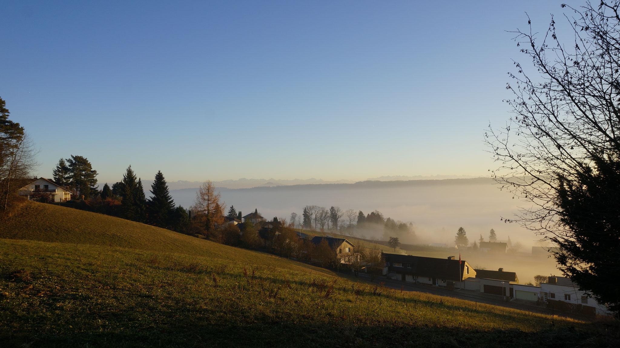 14.12.2016::Oberhalb Rebbergstrasse