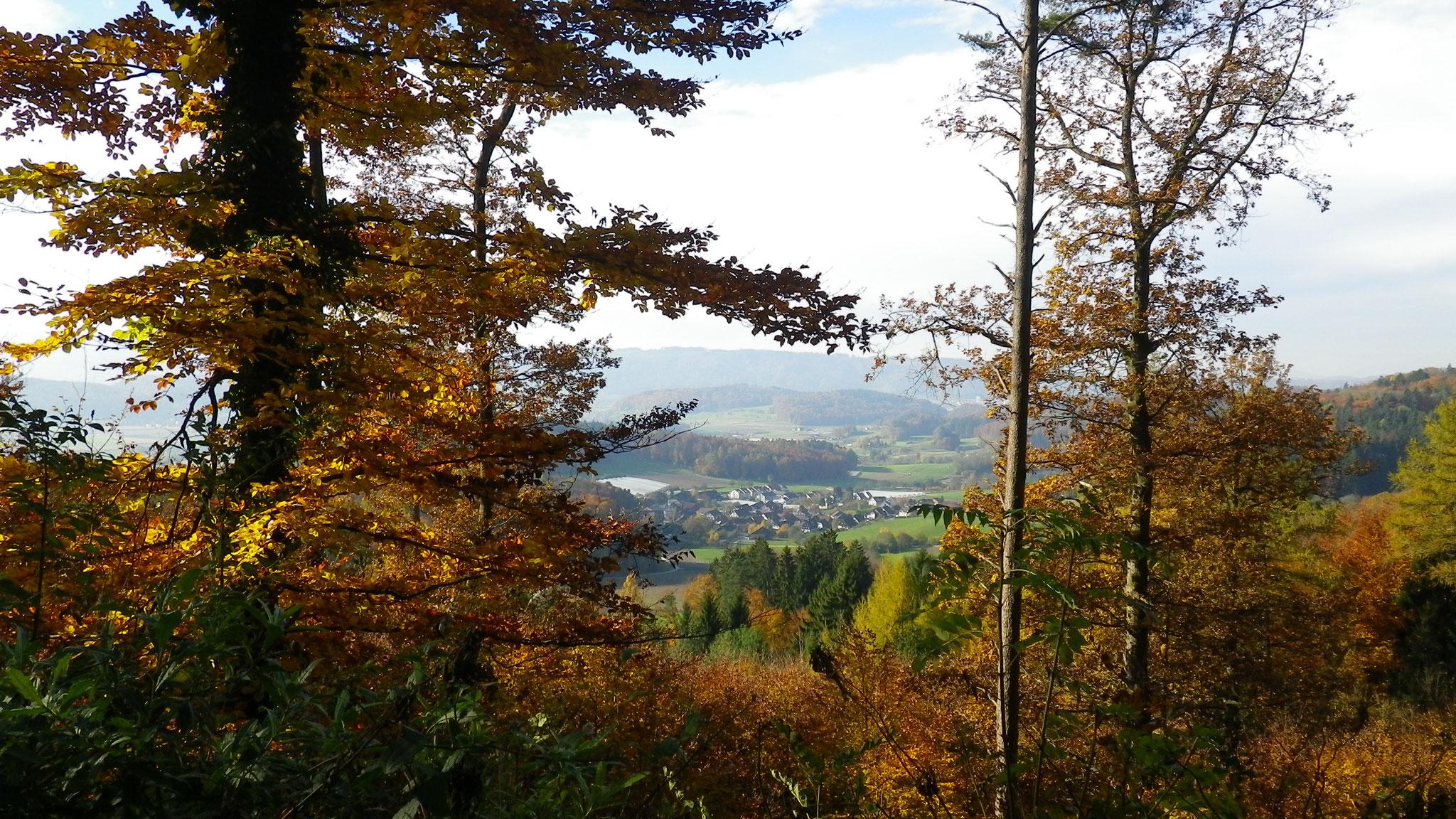 31.10.2010::Boppelsen, Sicht vom Cholholz