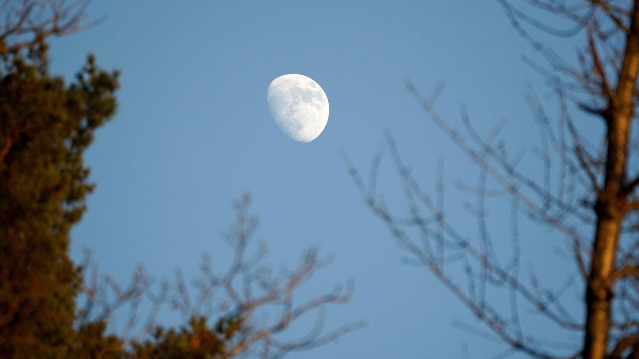 06.01.2020::Mond am späten Nachmittag vom Weiher aus