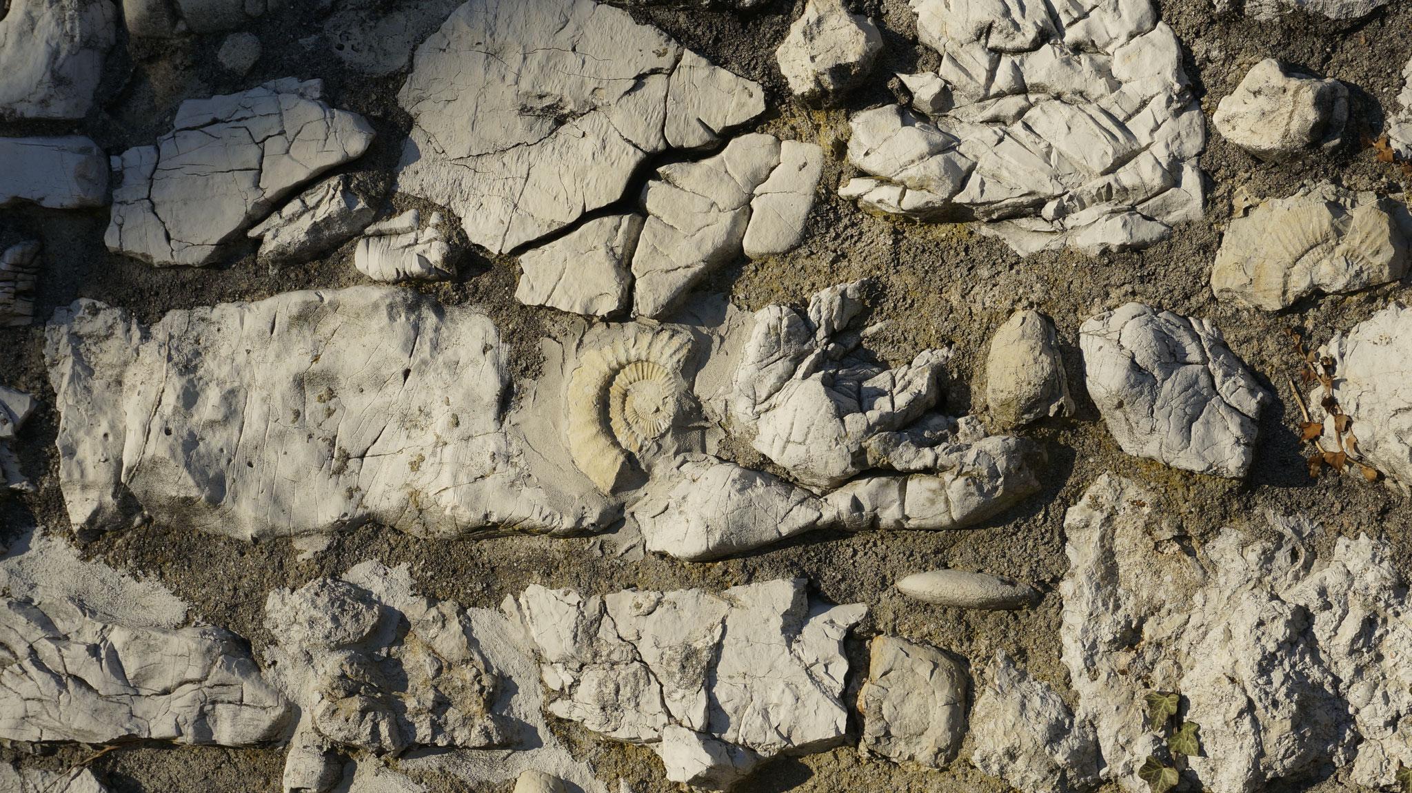 14.12.2016::Versteinerungen in der Restaurantmauer Süd