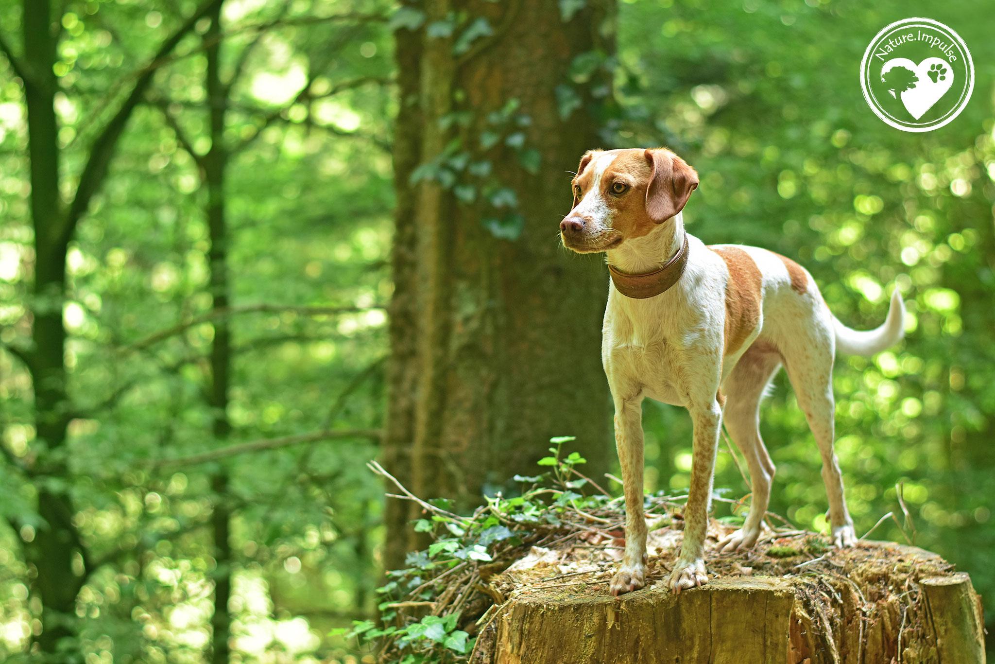 Nature.Impulse - Fotoshooting im Wald mit Hannah