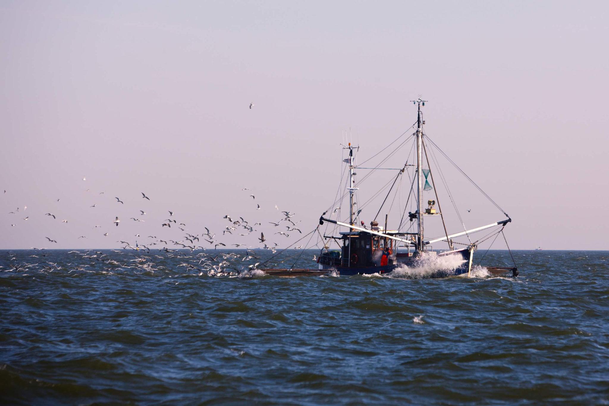 Fischgroßhandel