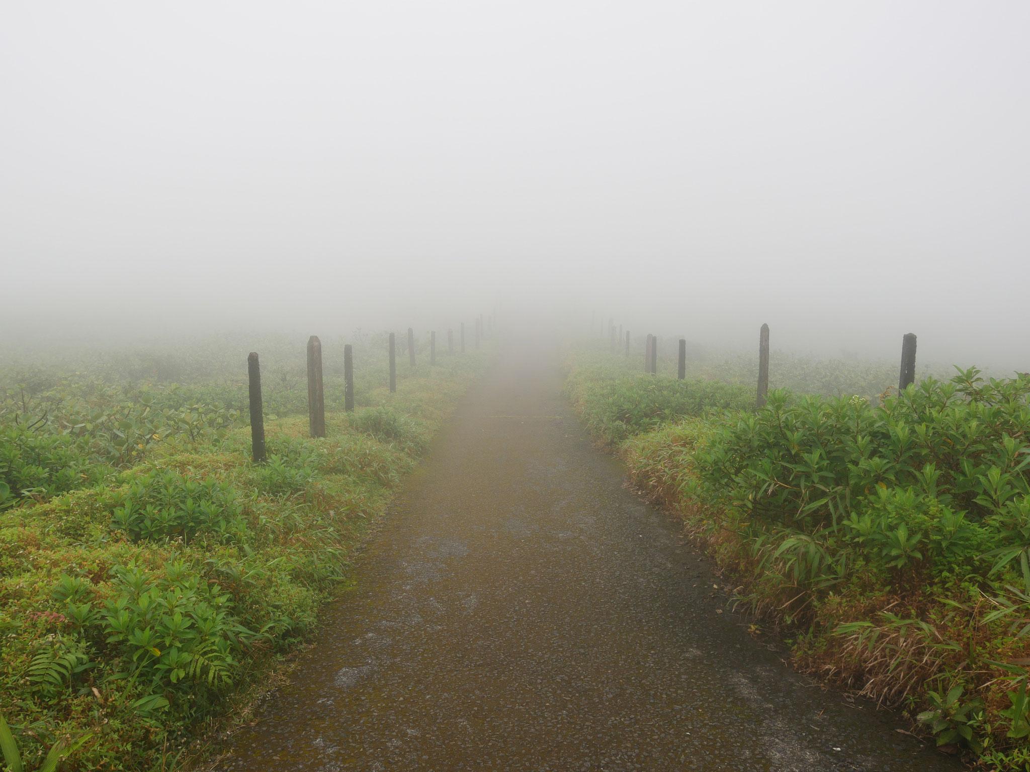 Bienvenu Brouillard