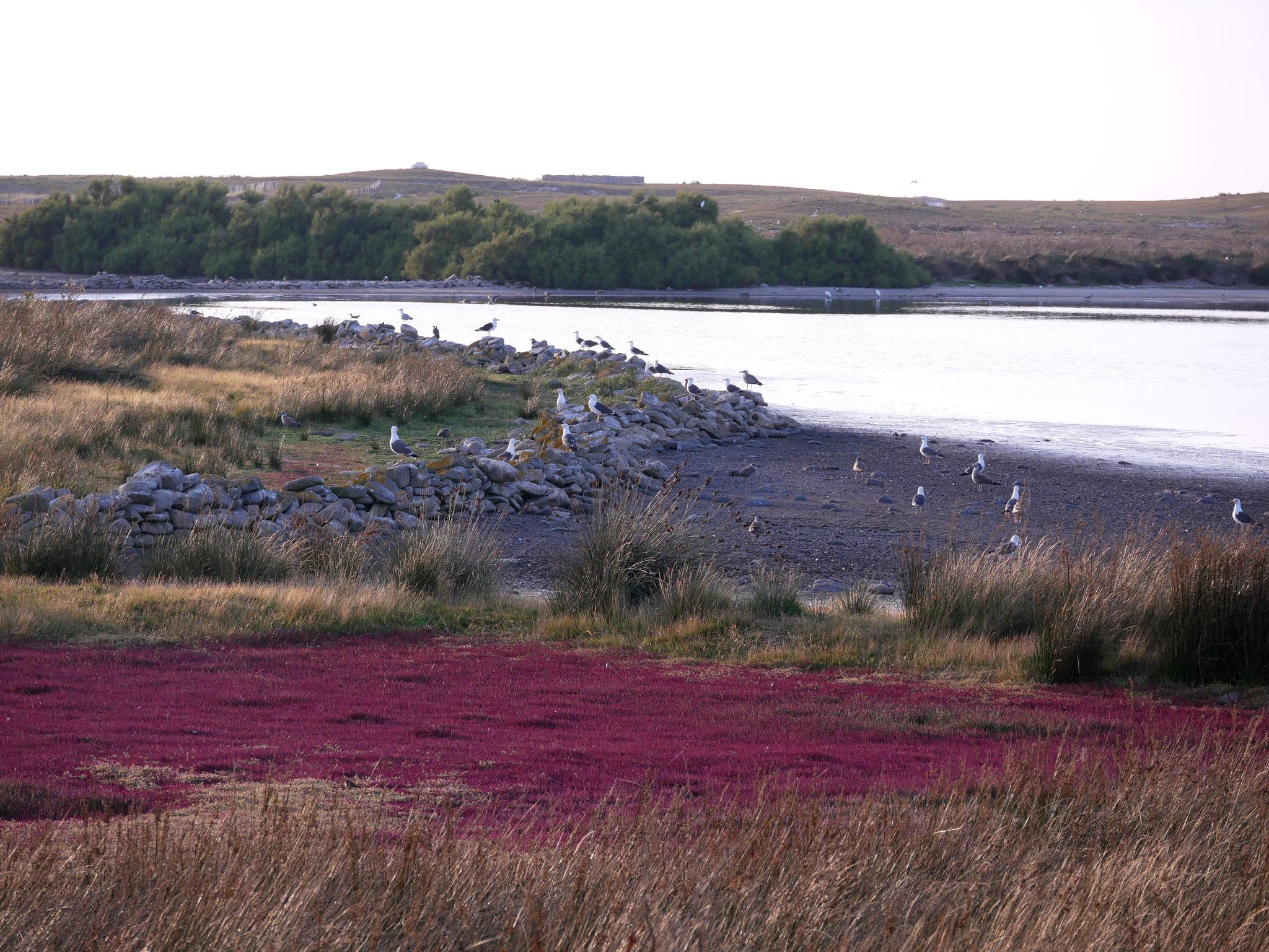 Les Glénans, île du Loch