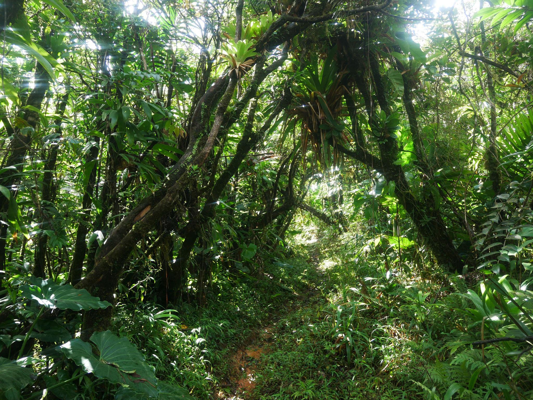 Toujours sous la canopée tropicale