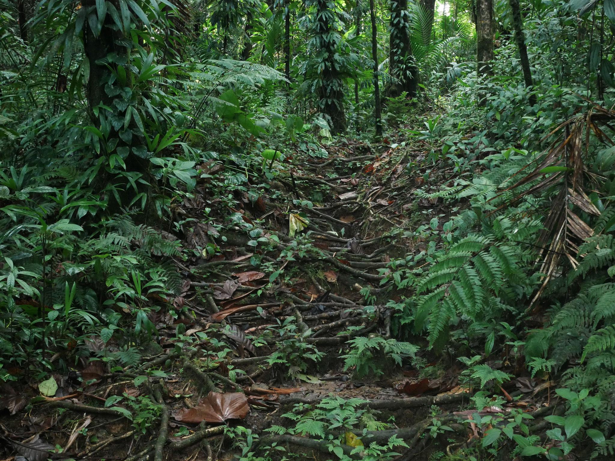 Le chemin sur un entrelacs de racines