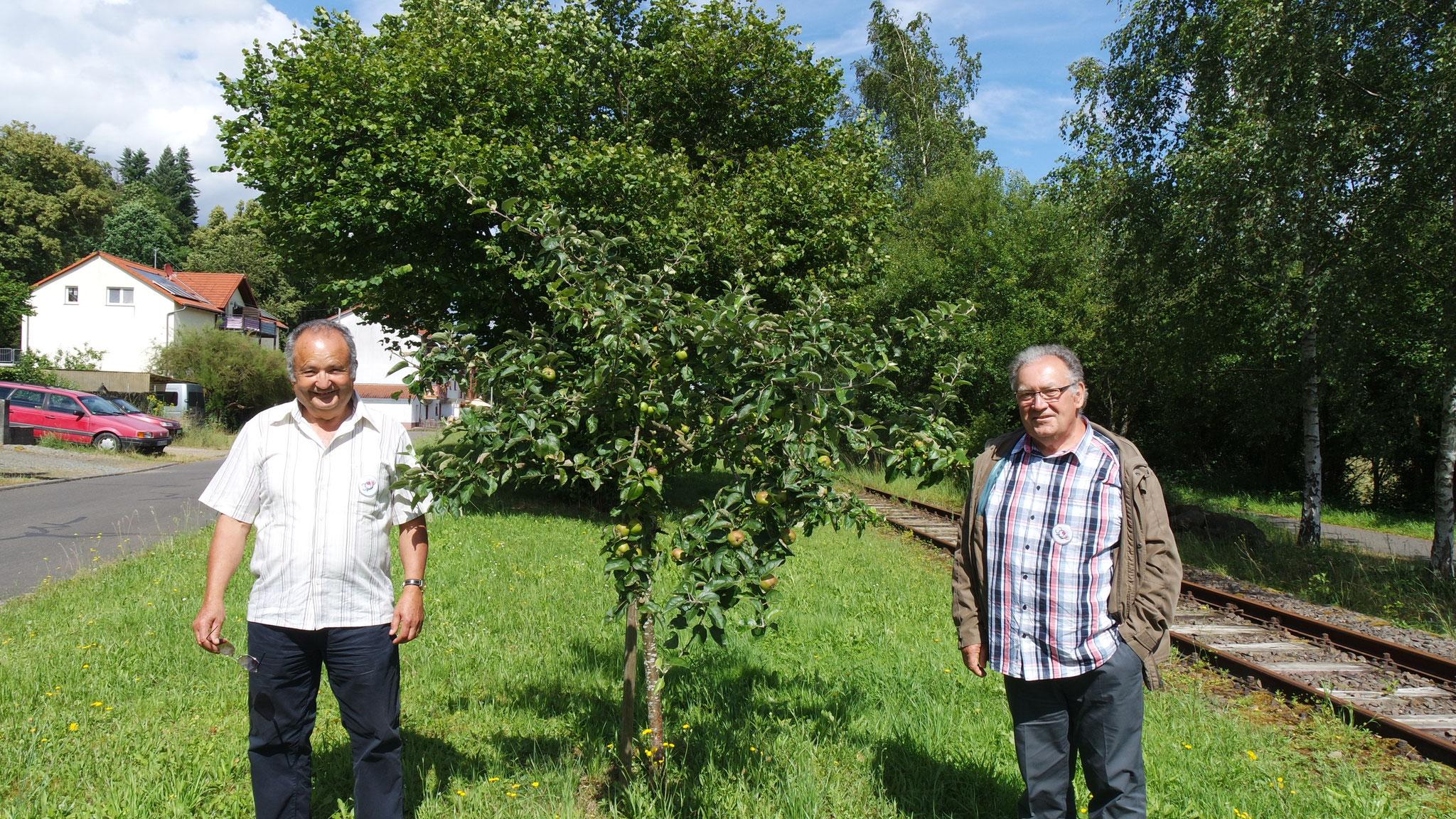 Le pommier planté il y a 4 ans par Joachim