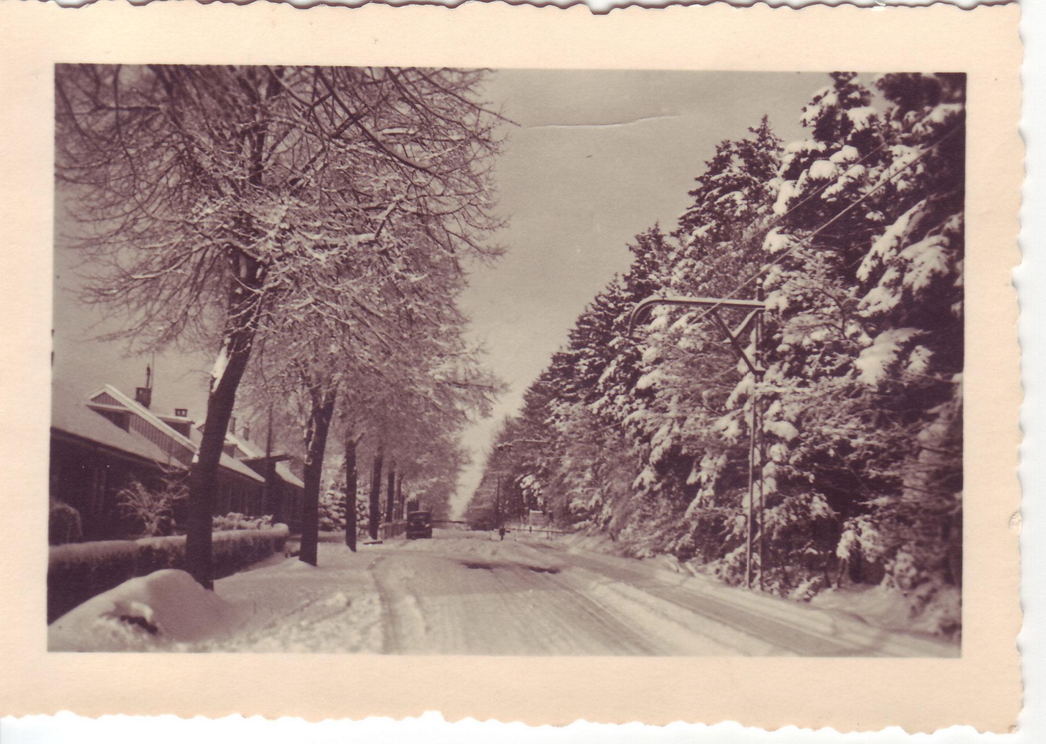 An Köpfchen im Winter