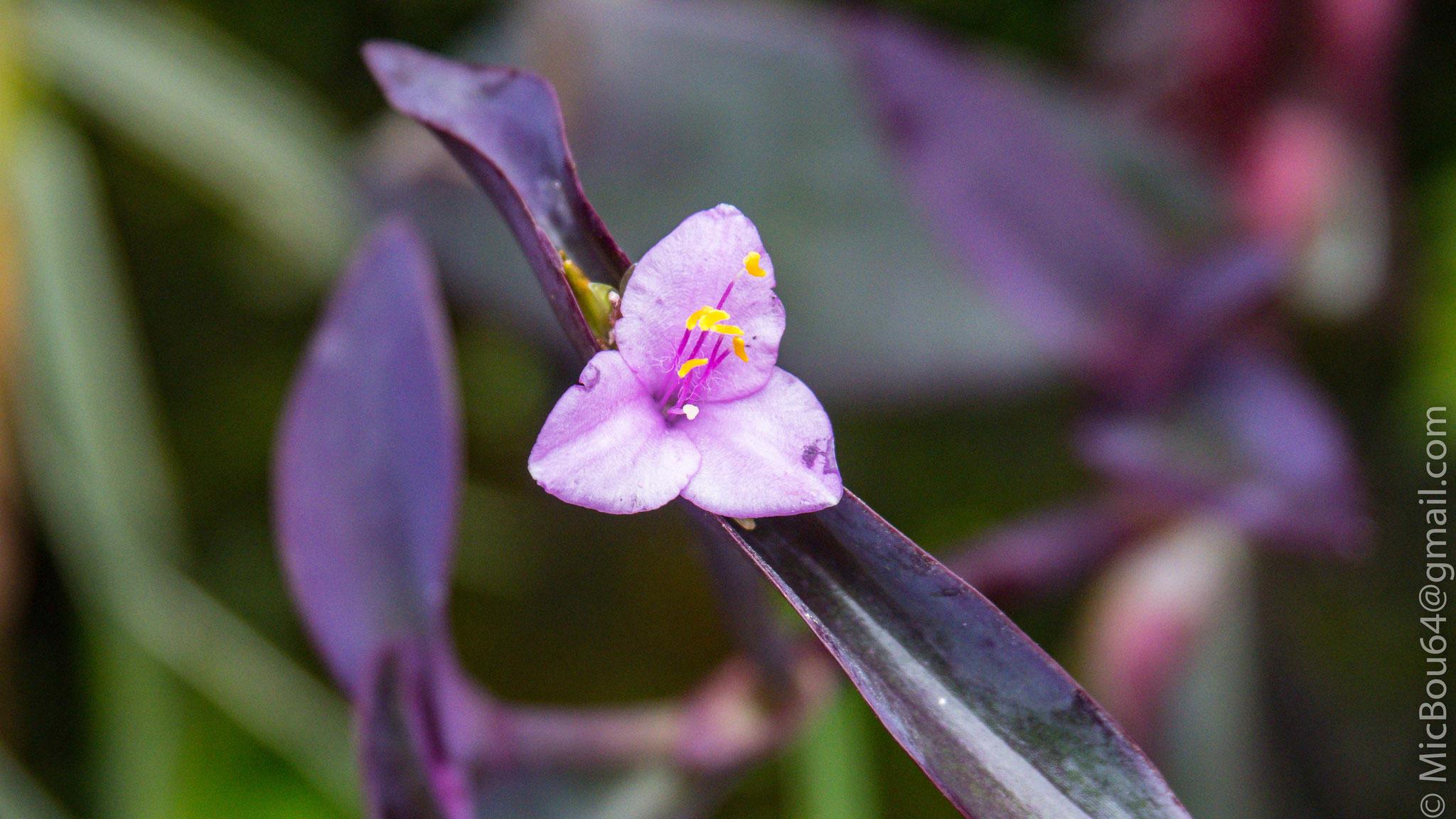 Blume (keine Ahnung was für eine Sorte)