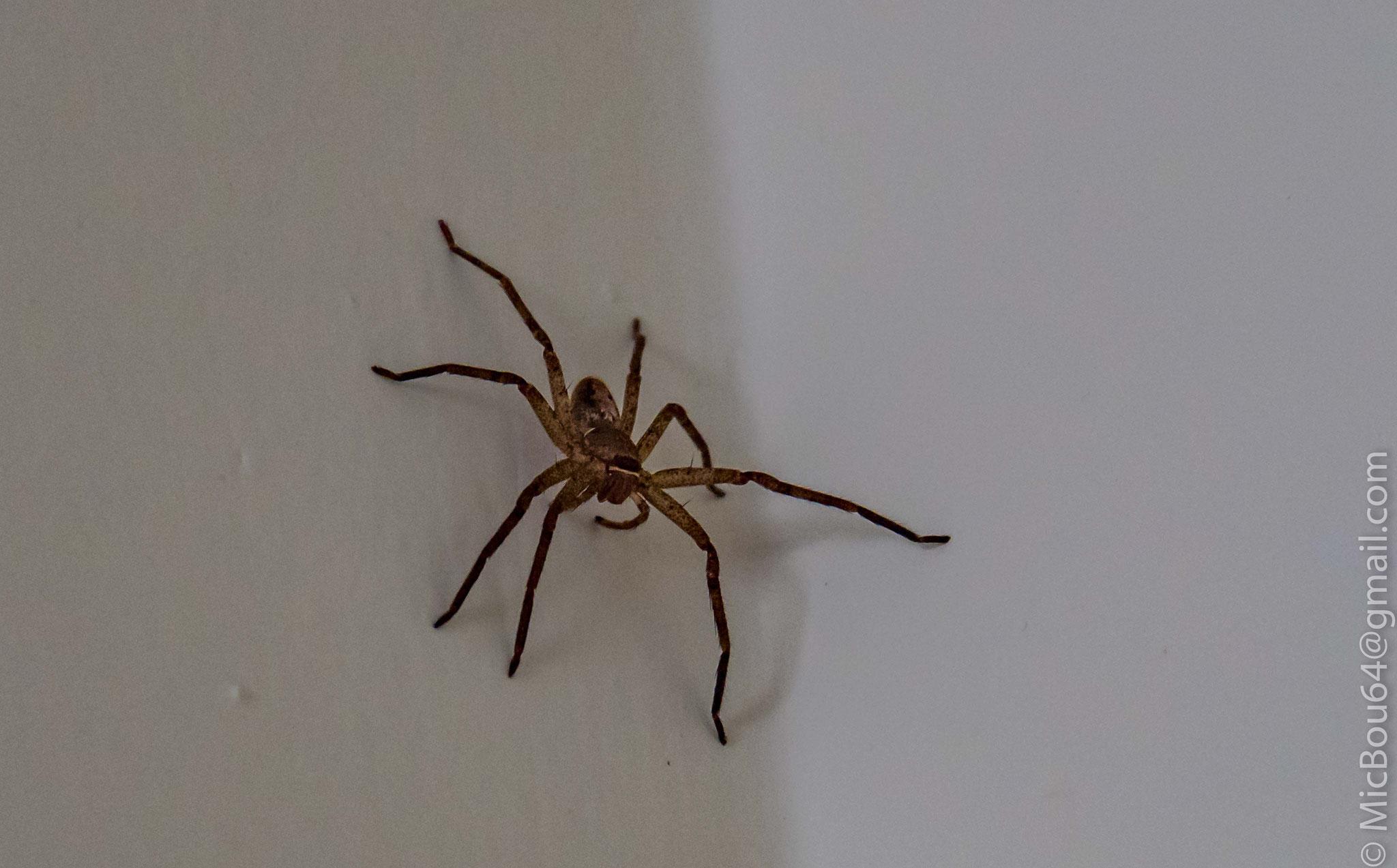 Spinne unter der Dusche (Nepal)