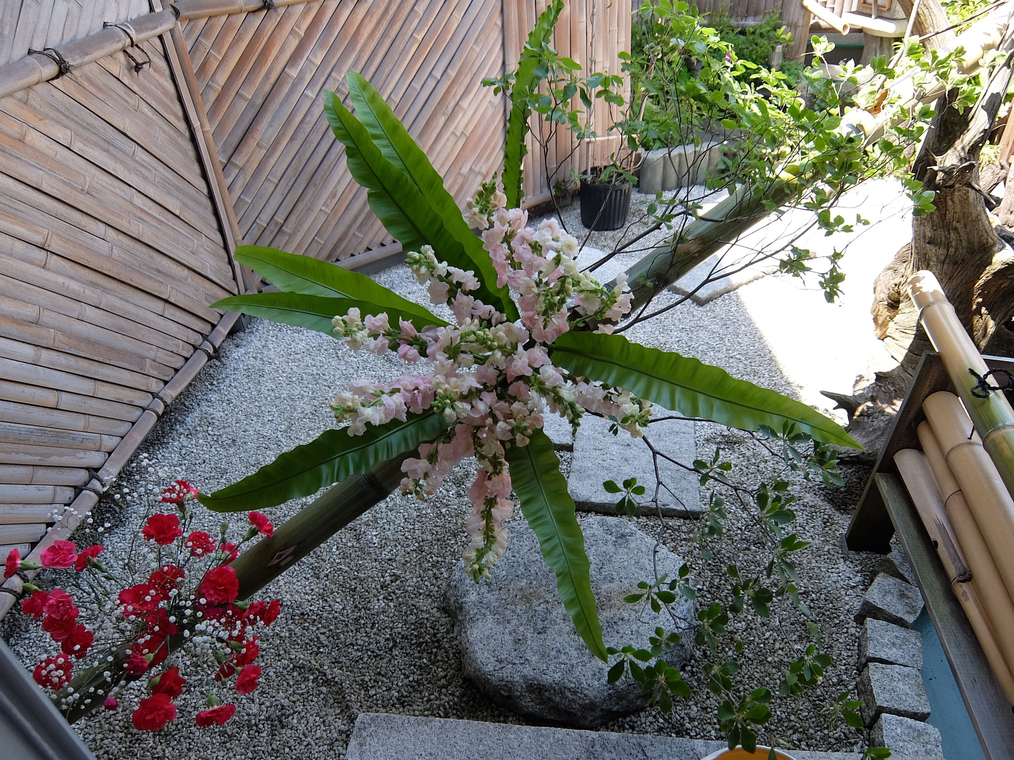花結界 タニワタリ 金魚草