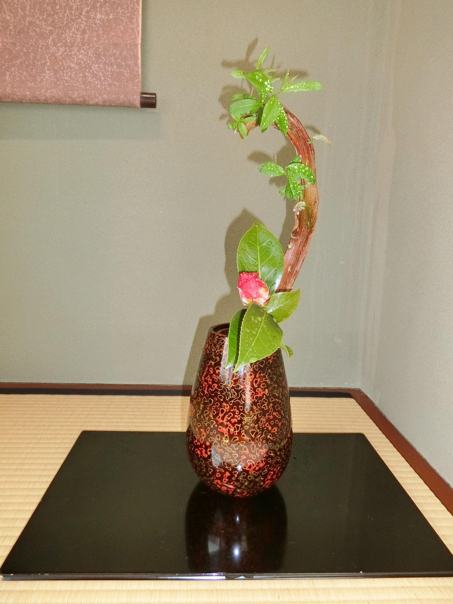 石化柳 椿