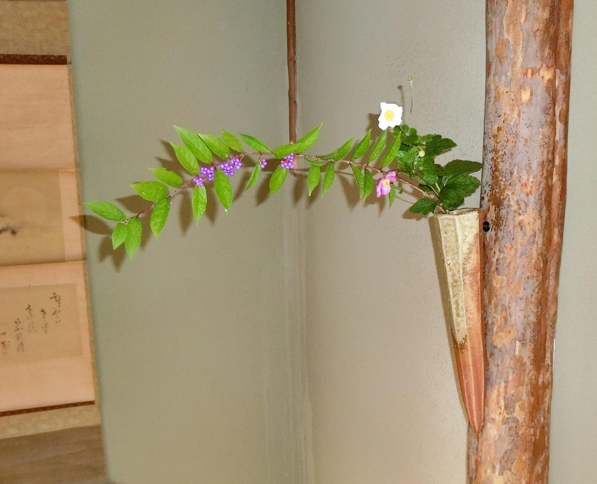 紫式部 秋名菊