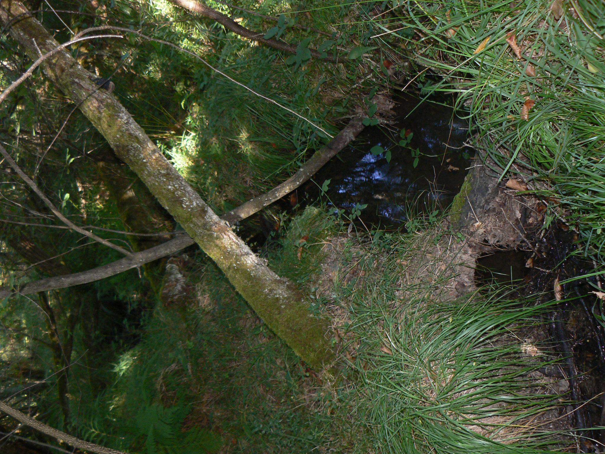 La Fontaine de Bimby  « A cette claire fontaine, viennent boire les bambis et se baigner les fées et lutins de Maujus »