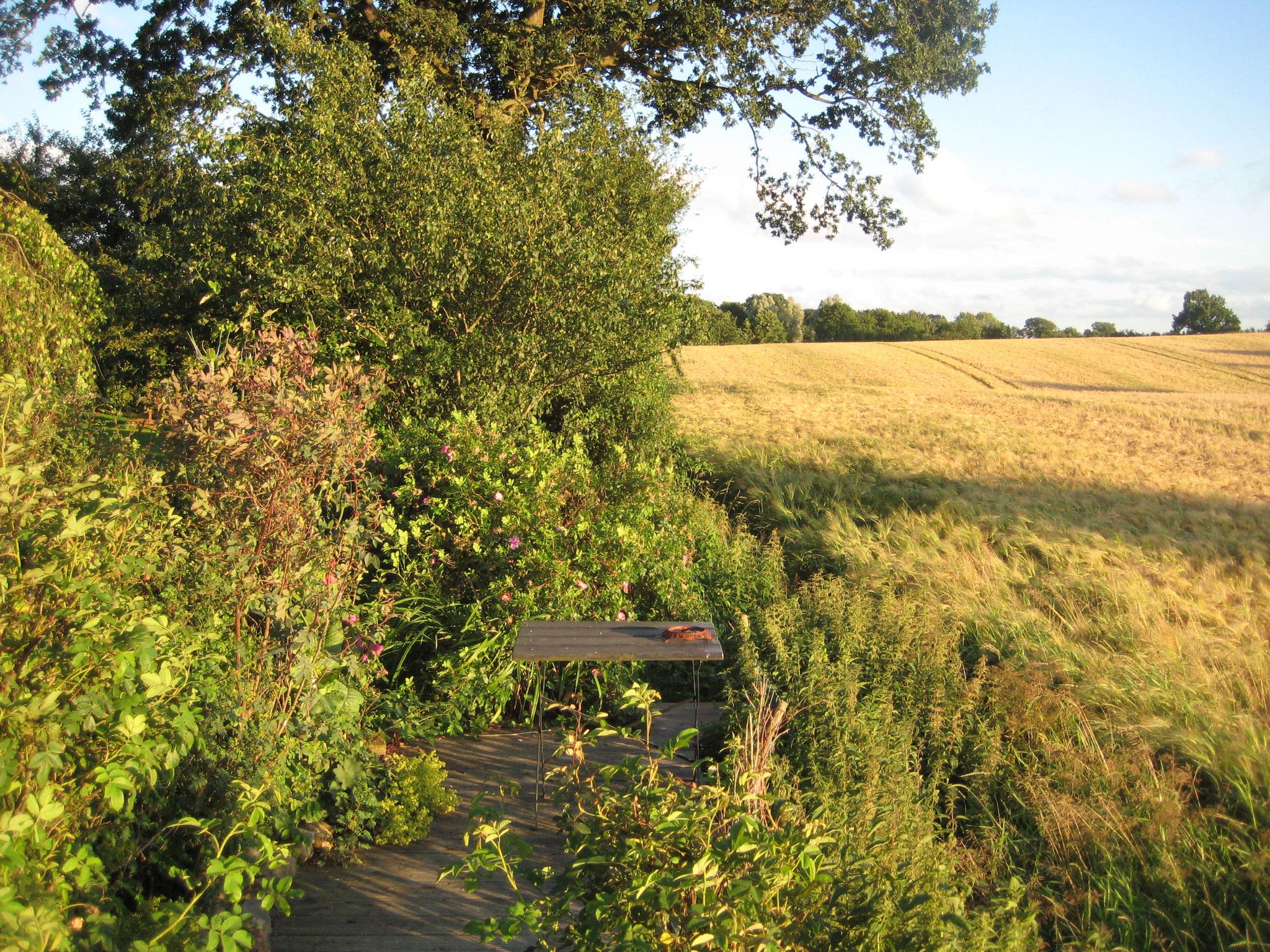 Eines der angrenzenden Felder im Abendlicht.