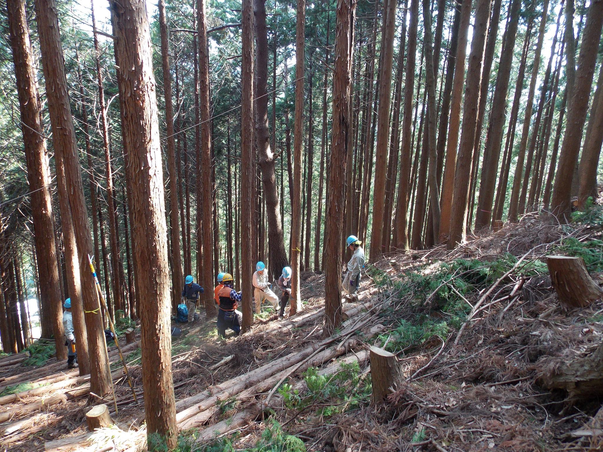 8班間伐風景:急斜面での作業