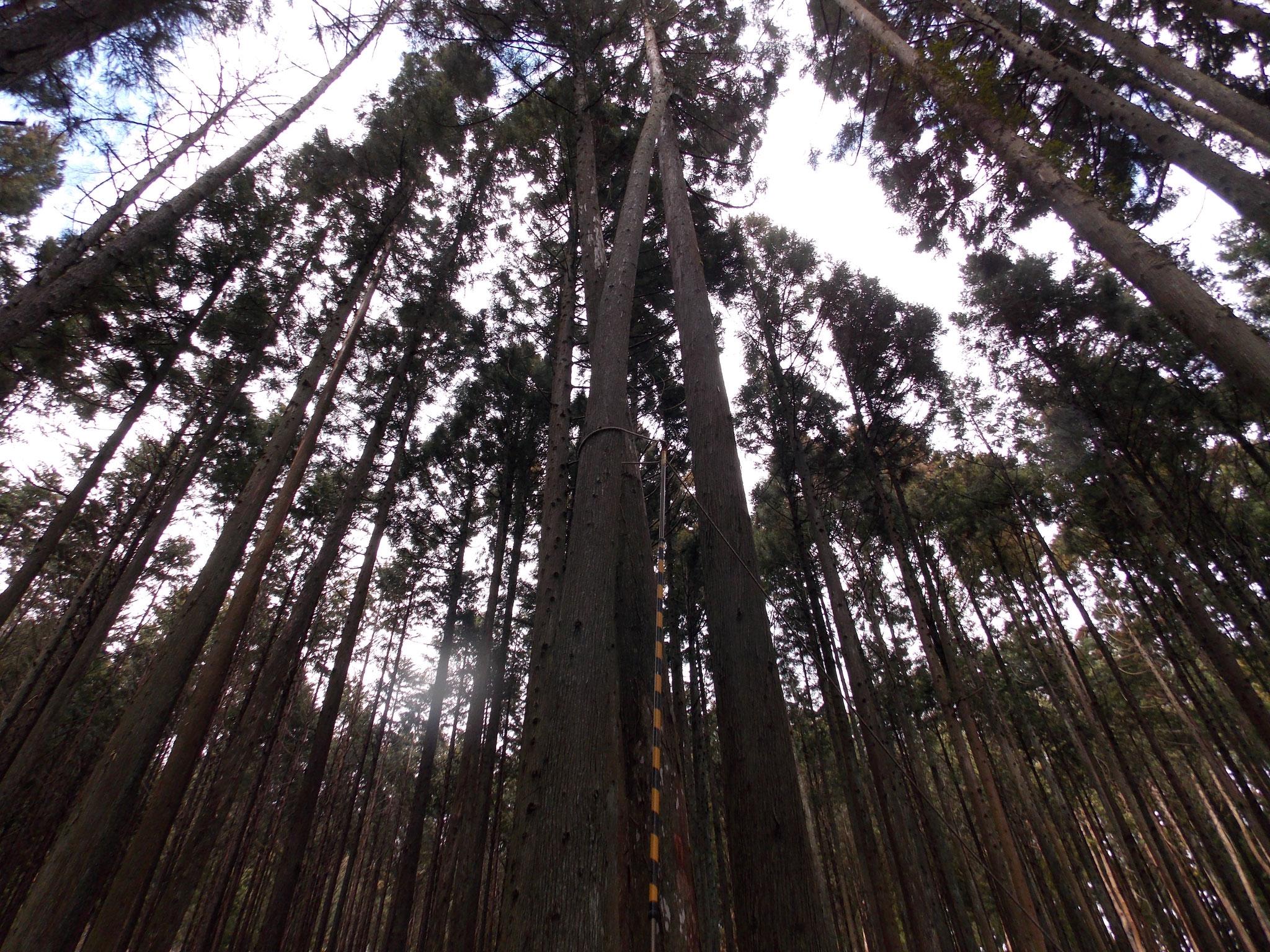 既に係かり木状態
