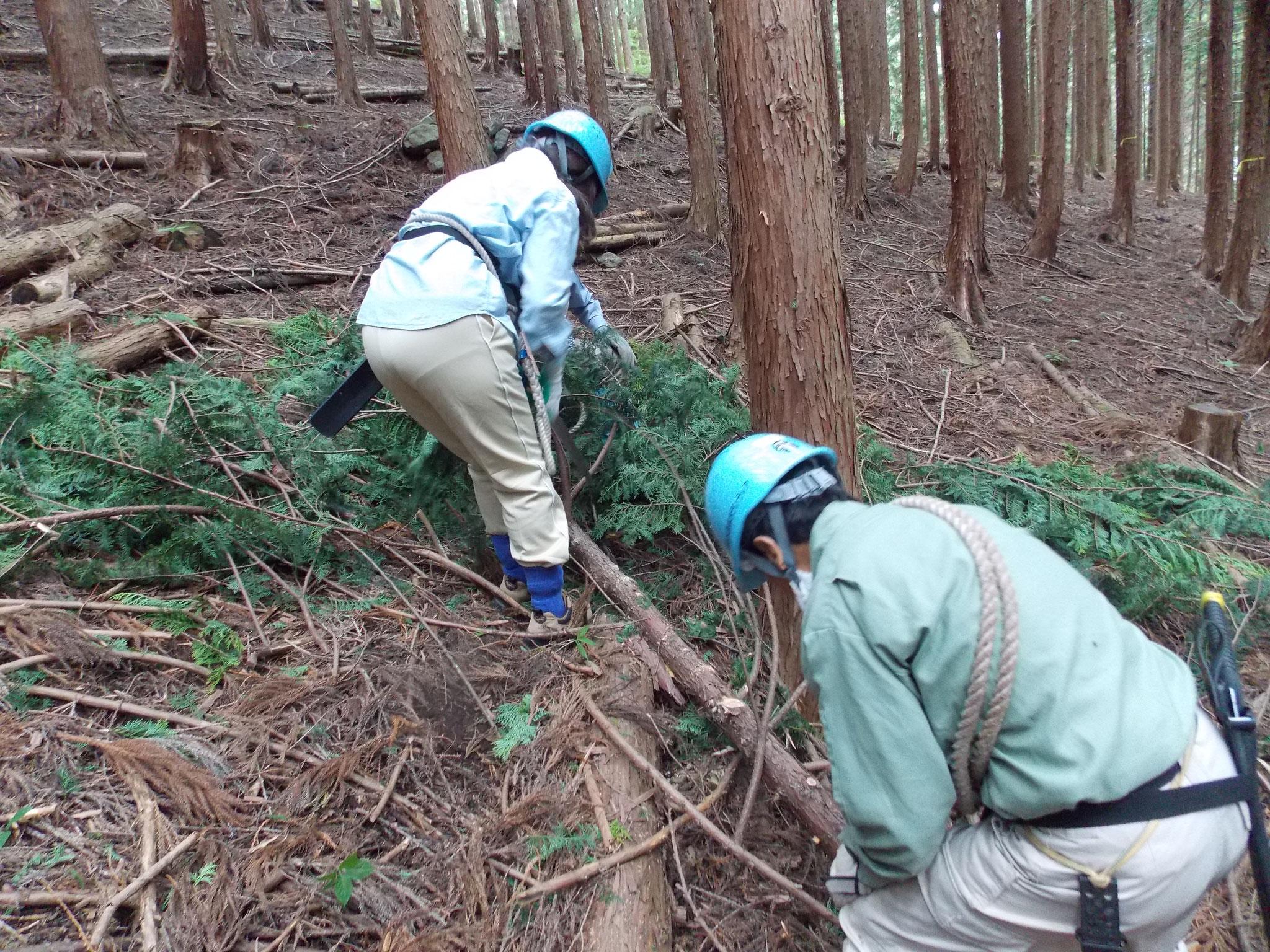 1班の林間作業