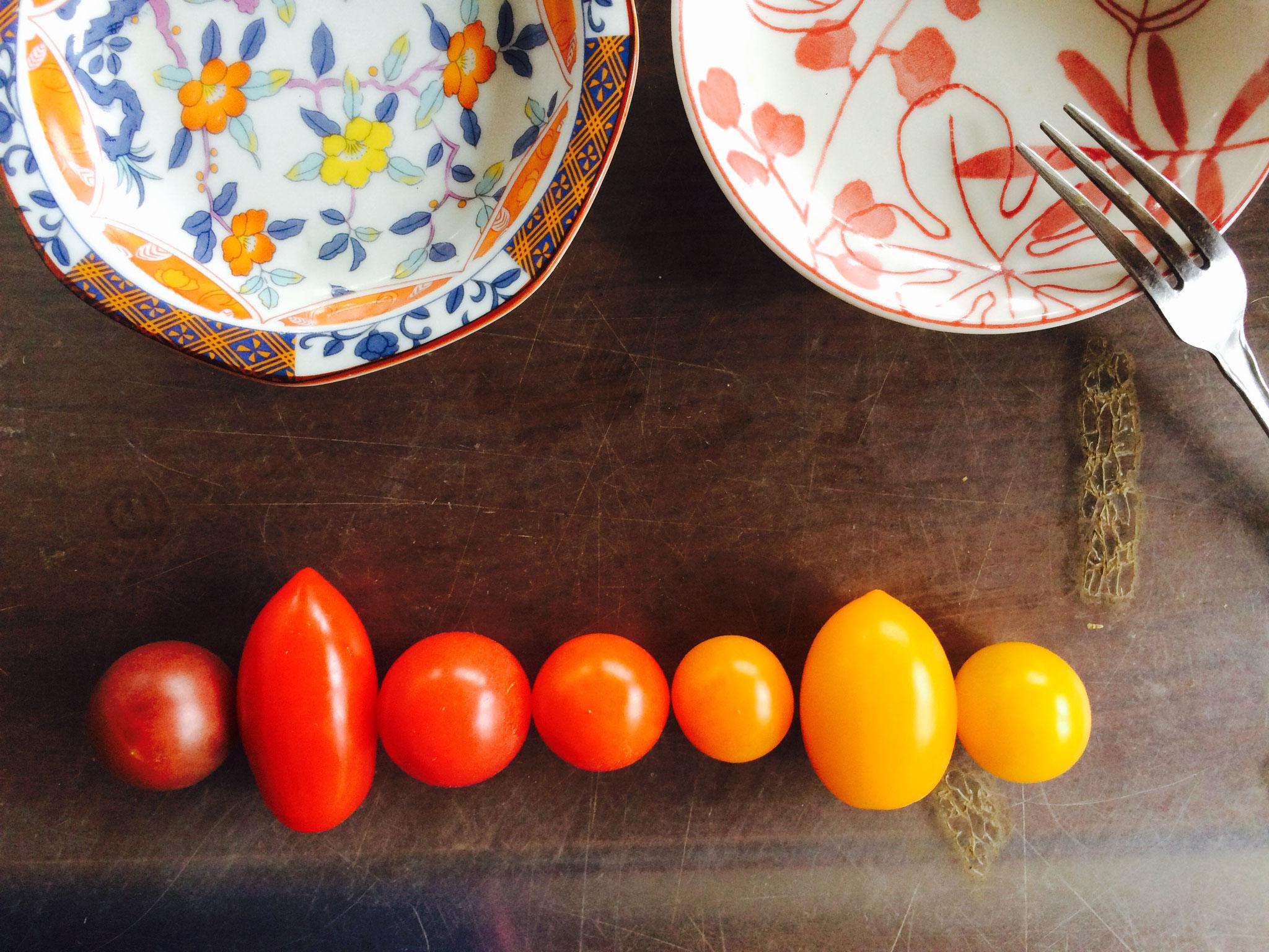 カラフルトマト