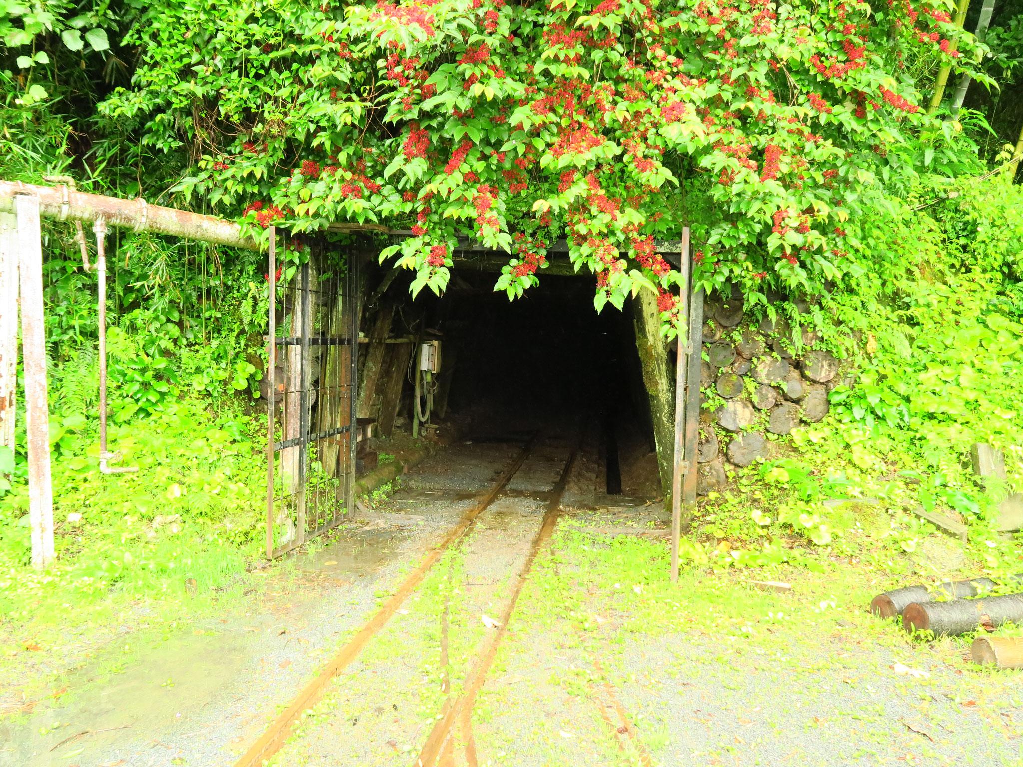 現役の坑内には多くの歴史も刻まれています。季節ごとに雰囲気も変わります。