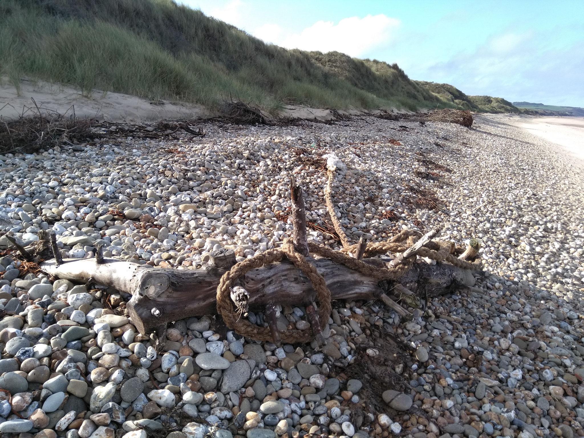 Strandgut - die Natur macht Kunst :-)