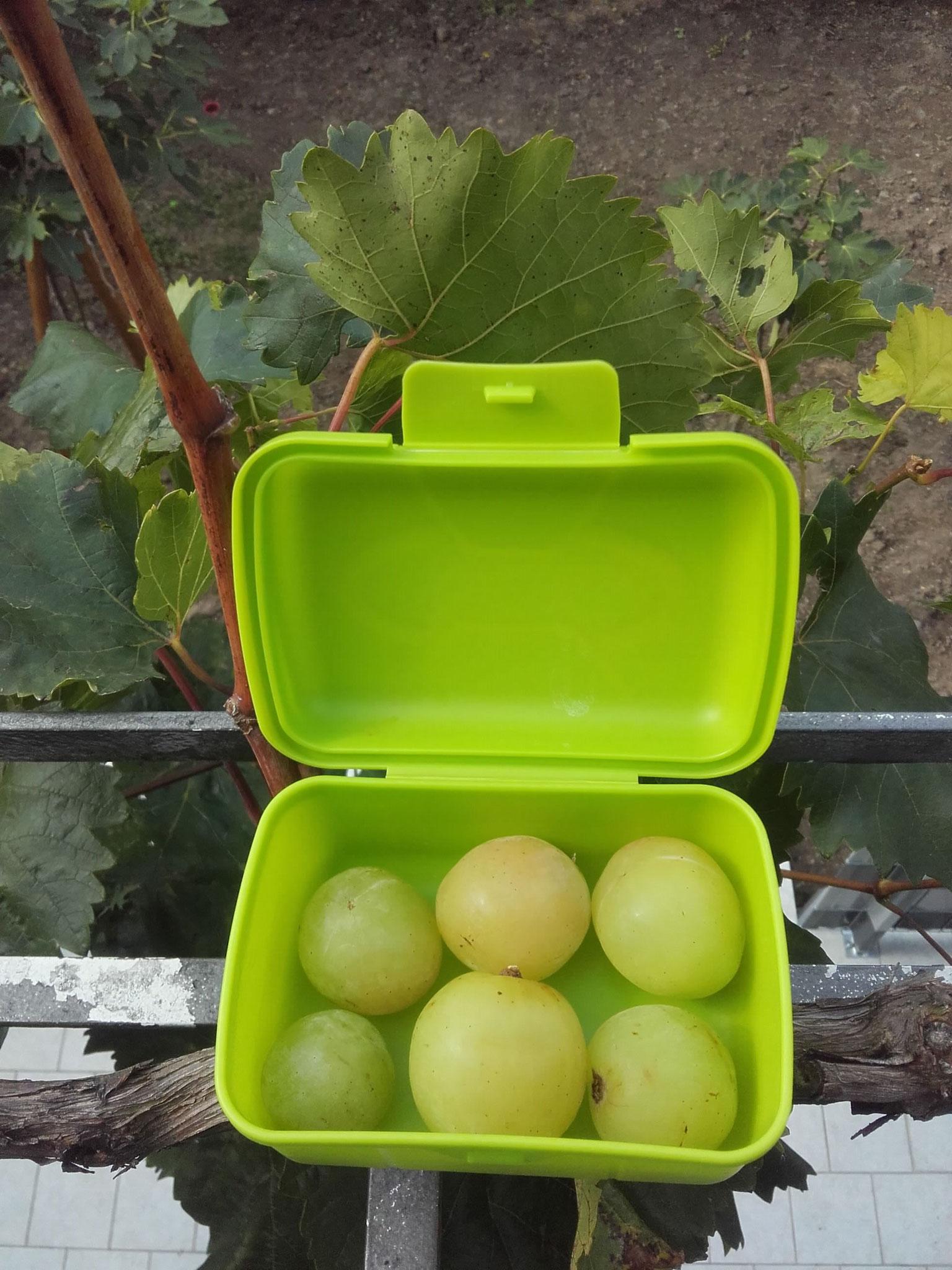 Rodnitschok, Obst für die Kinderschule