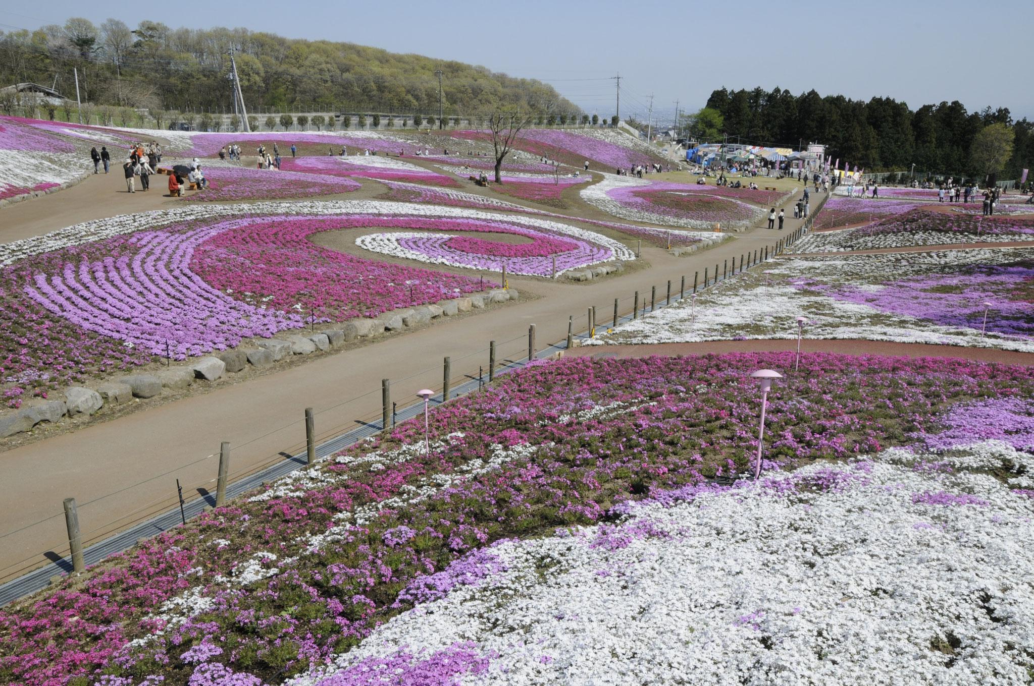 箕郷町の芝桜