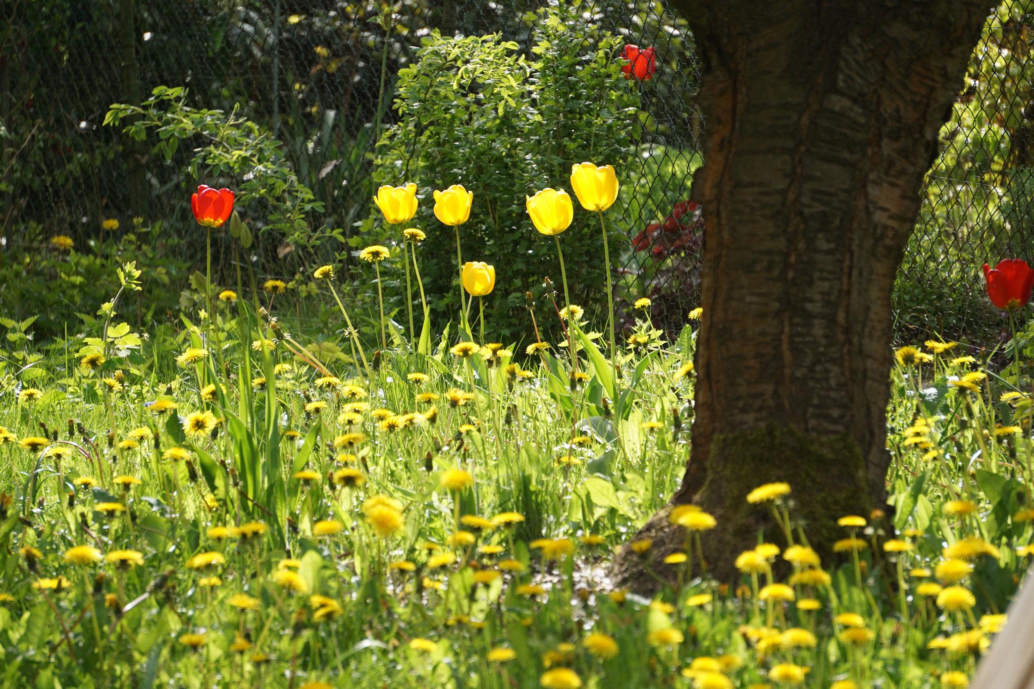 """Frühlingsgetummel in der """"Bunten Flora""""."""