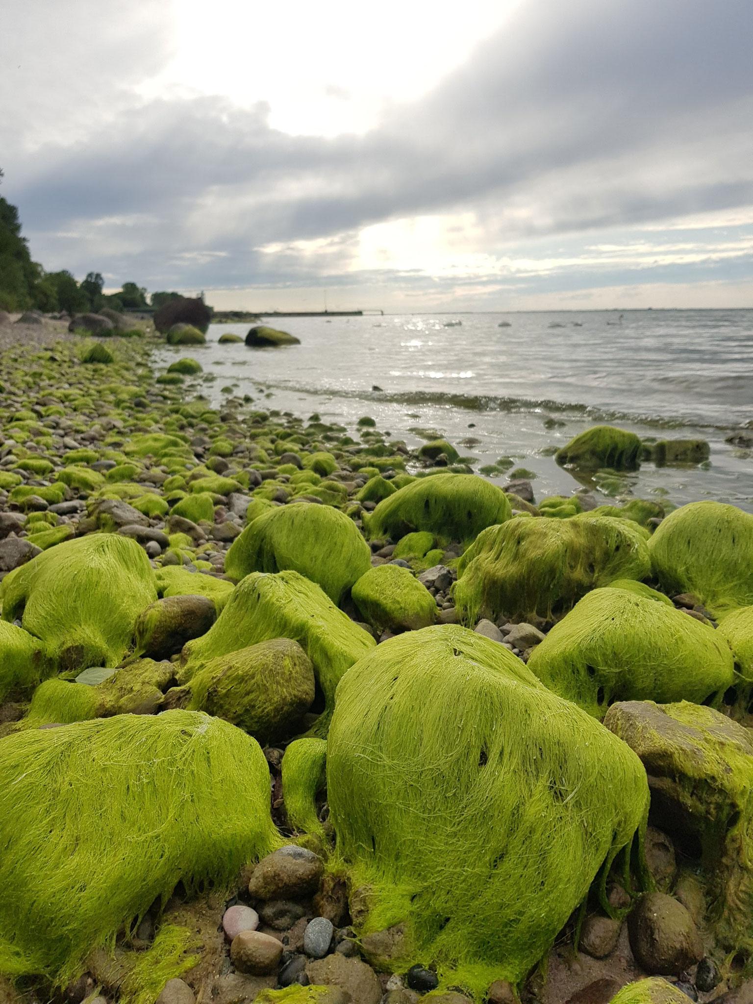 """""""Die grünen Steine"""" - Vierower Strand © Anke Müller"""