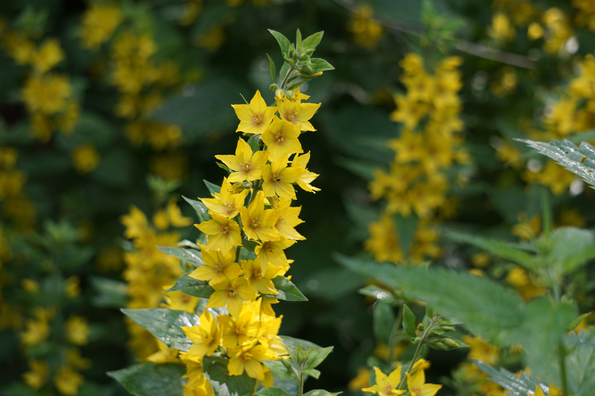 Strahlende Blütenpracht im Gemeinschaftsgarten.