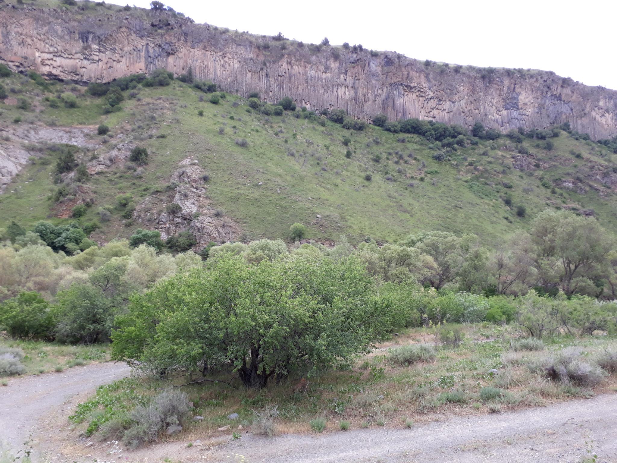 Der Weg zum Kloster Gndevank