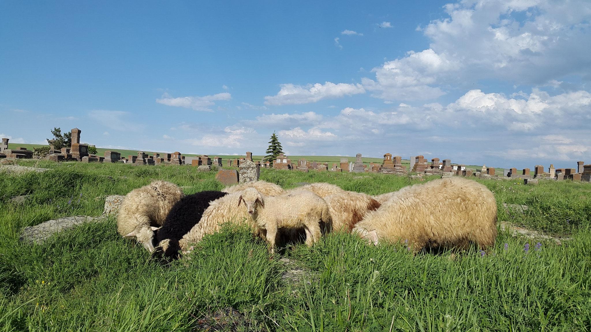 Rasen mähen zwischen den Kreuzsteinen von Noratus