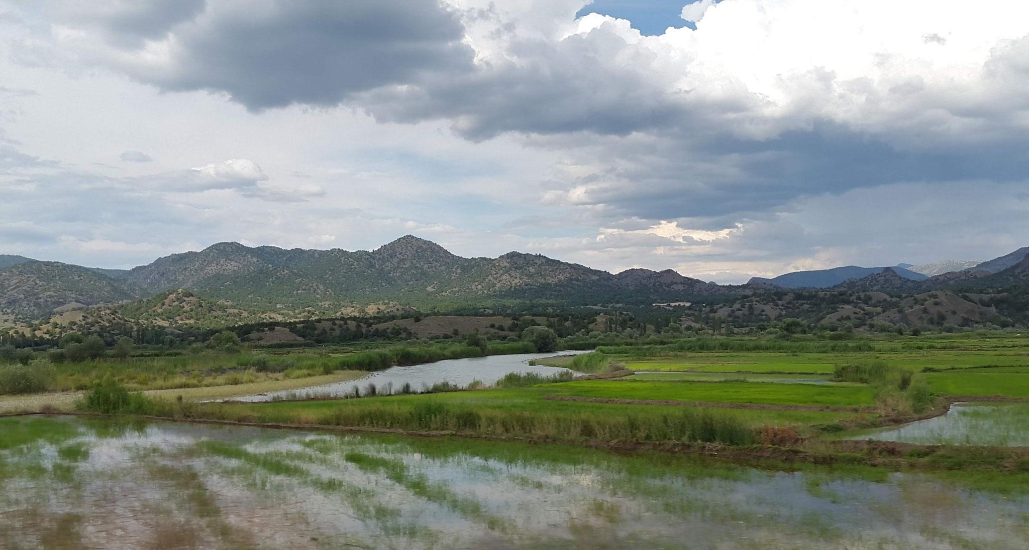 Reisanbau in der Türkei
