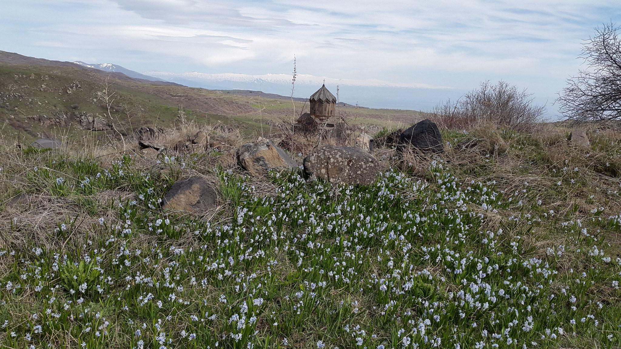 Festung und Kirche inmitten von Hyazinten