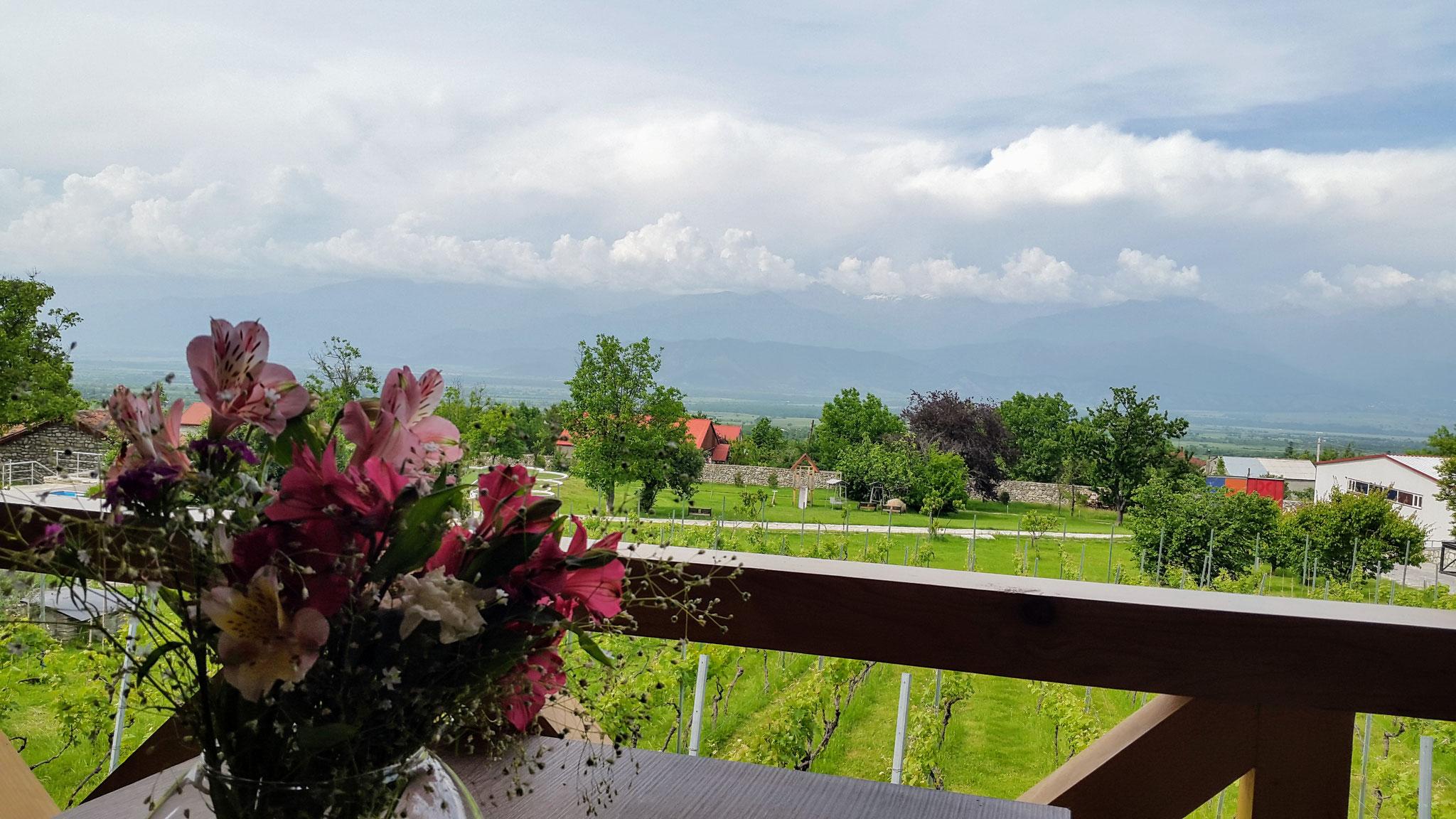 Weingut Schuchmann, Kachetien, Georgien
