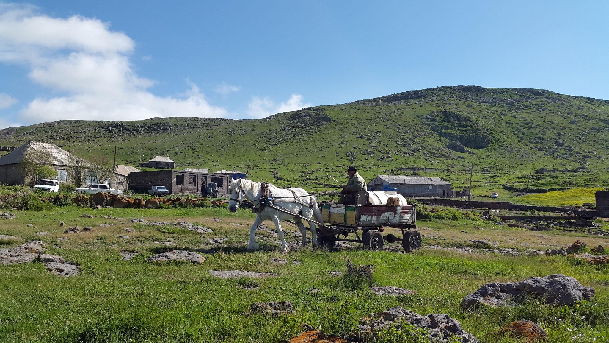 Transport der Schafsmilch