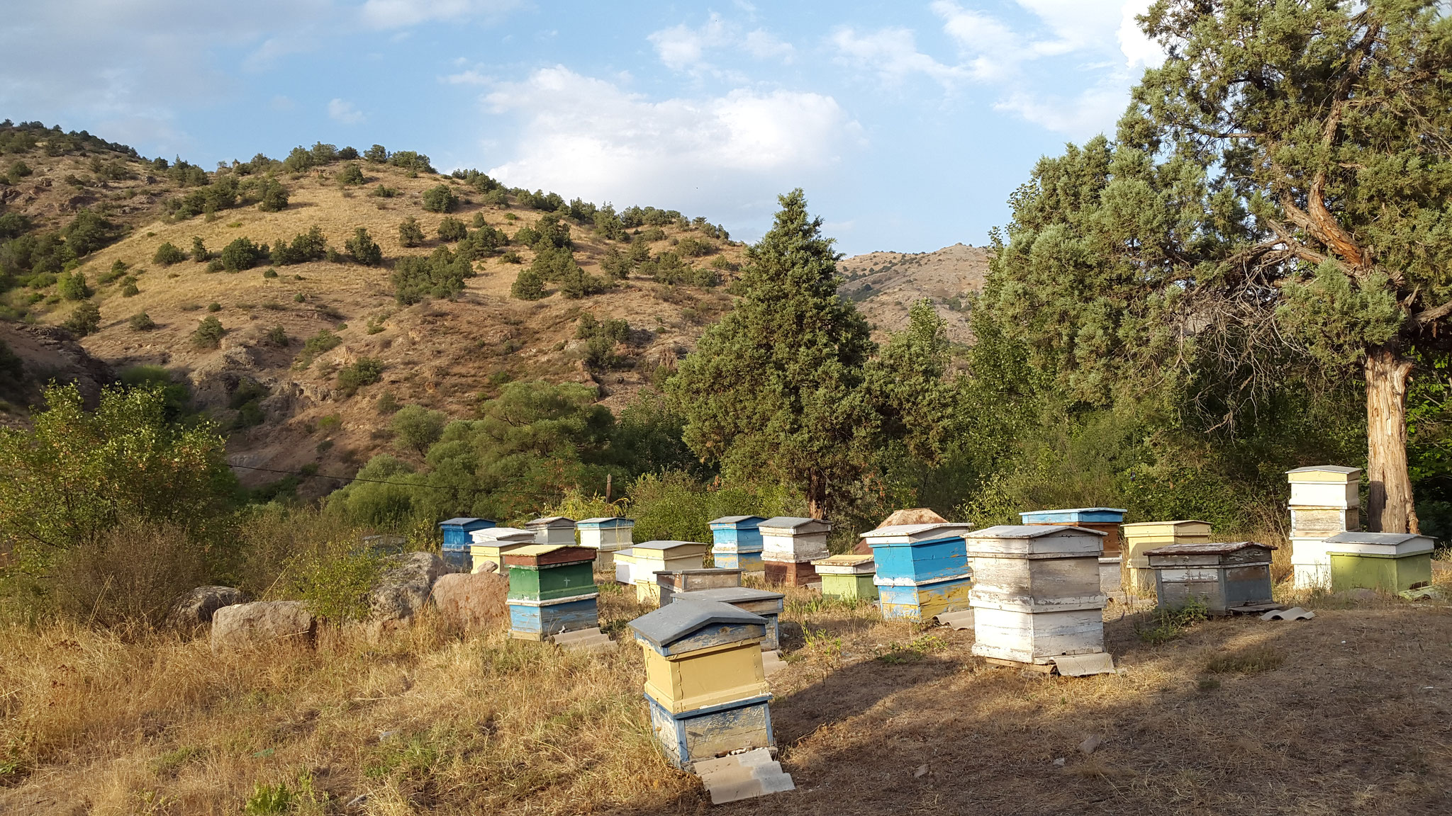 Und zur Abwechslung noch ordentlich-bunte Bienenstöcke