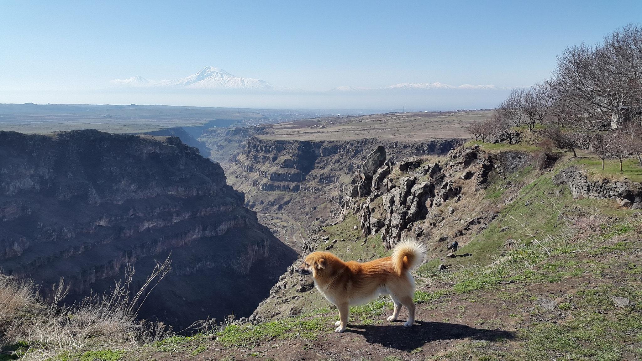 Blick in die Kasakh-Schlucht, der Kloster-Hund leistet uns Gesellschaft