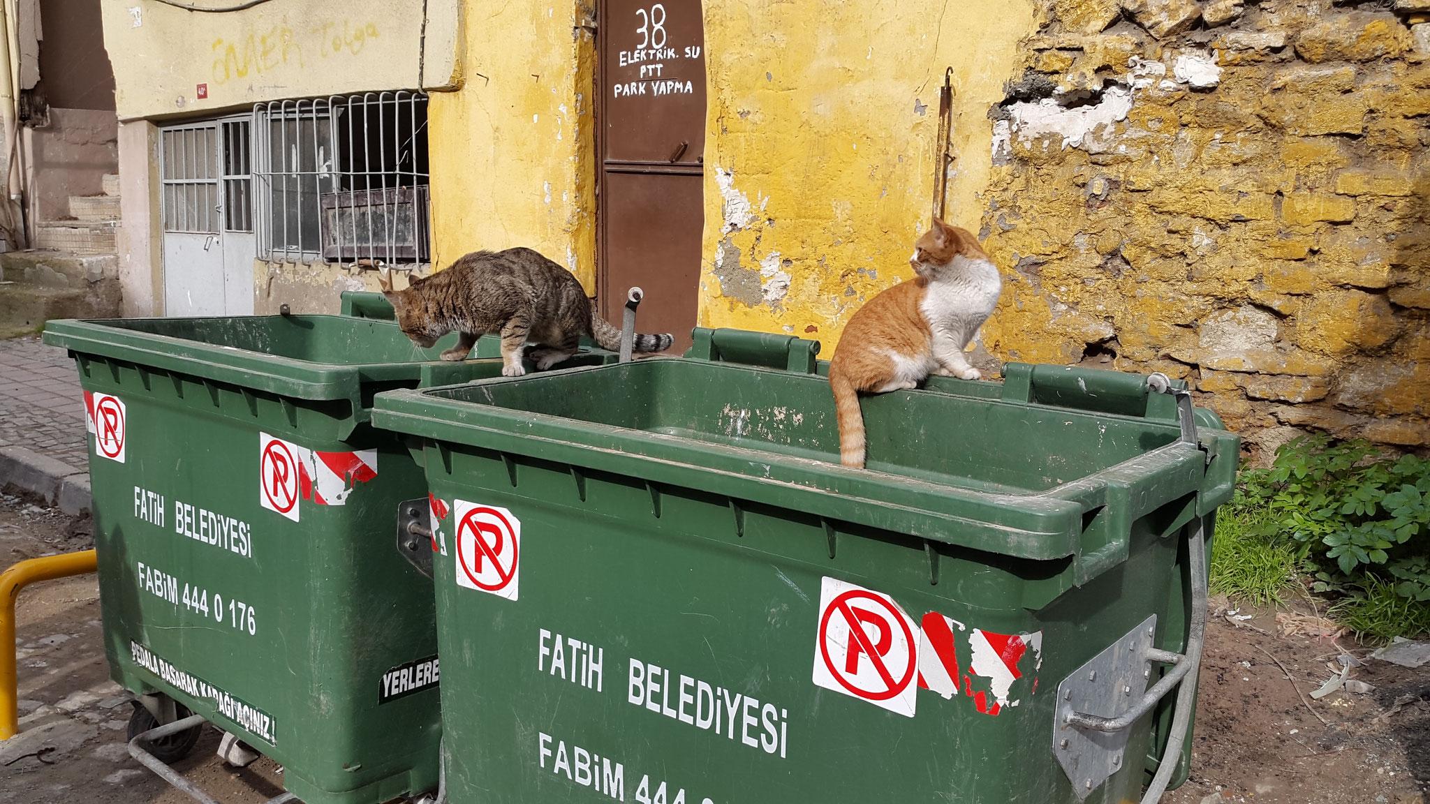 Auch Istanbuler Straßenkatzen lieben Mülltonnen, ...