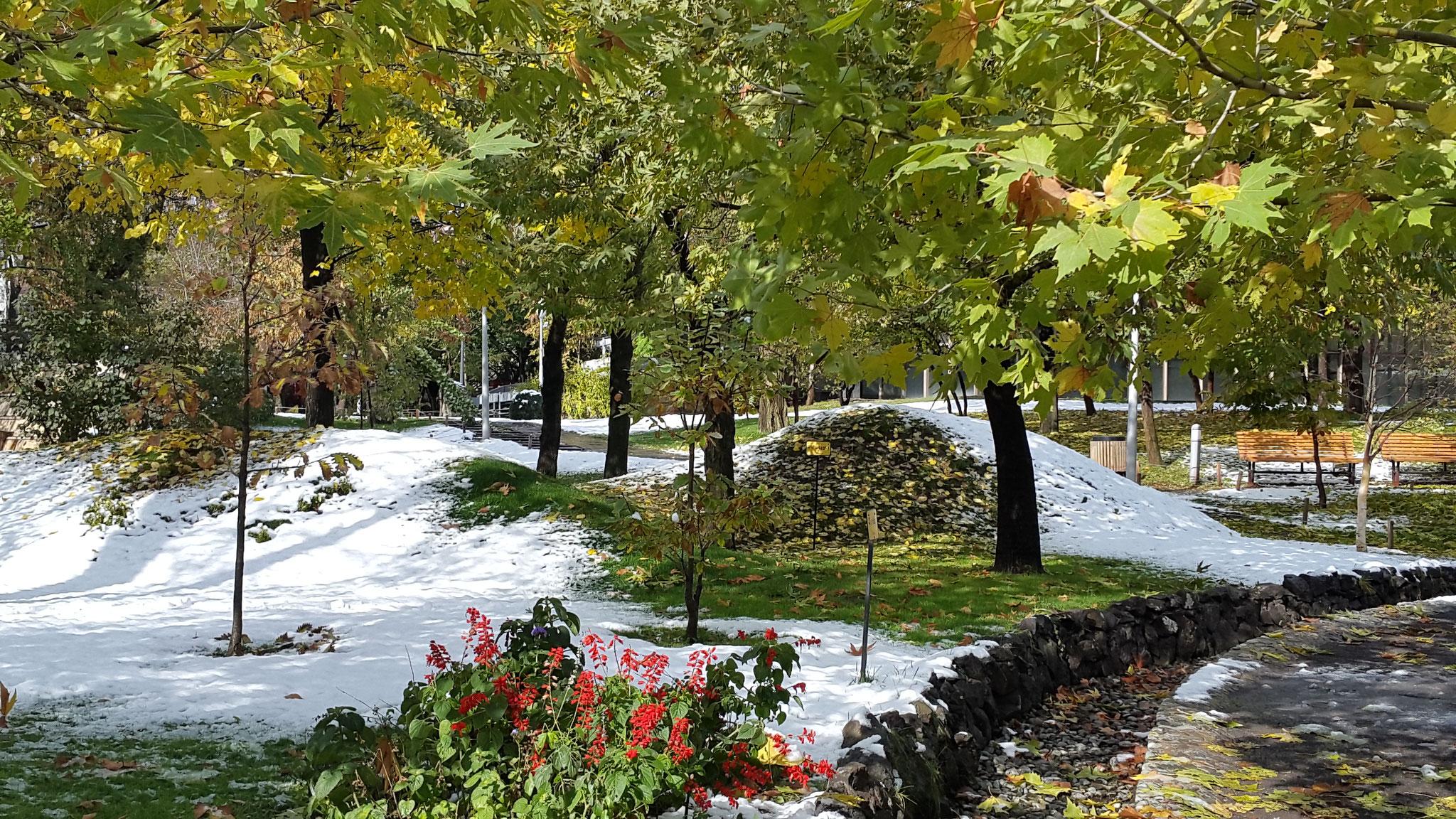 Yerevan Anfang November 2016: Herbstliche Bäume im ersten Schnee